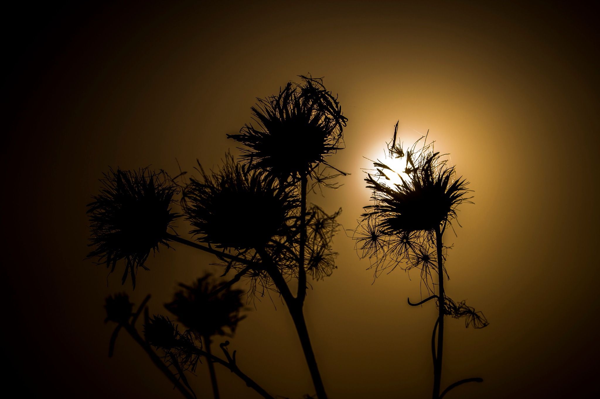 Shadows by Nektarios Mpouterakos