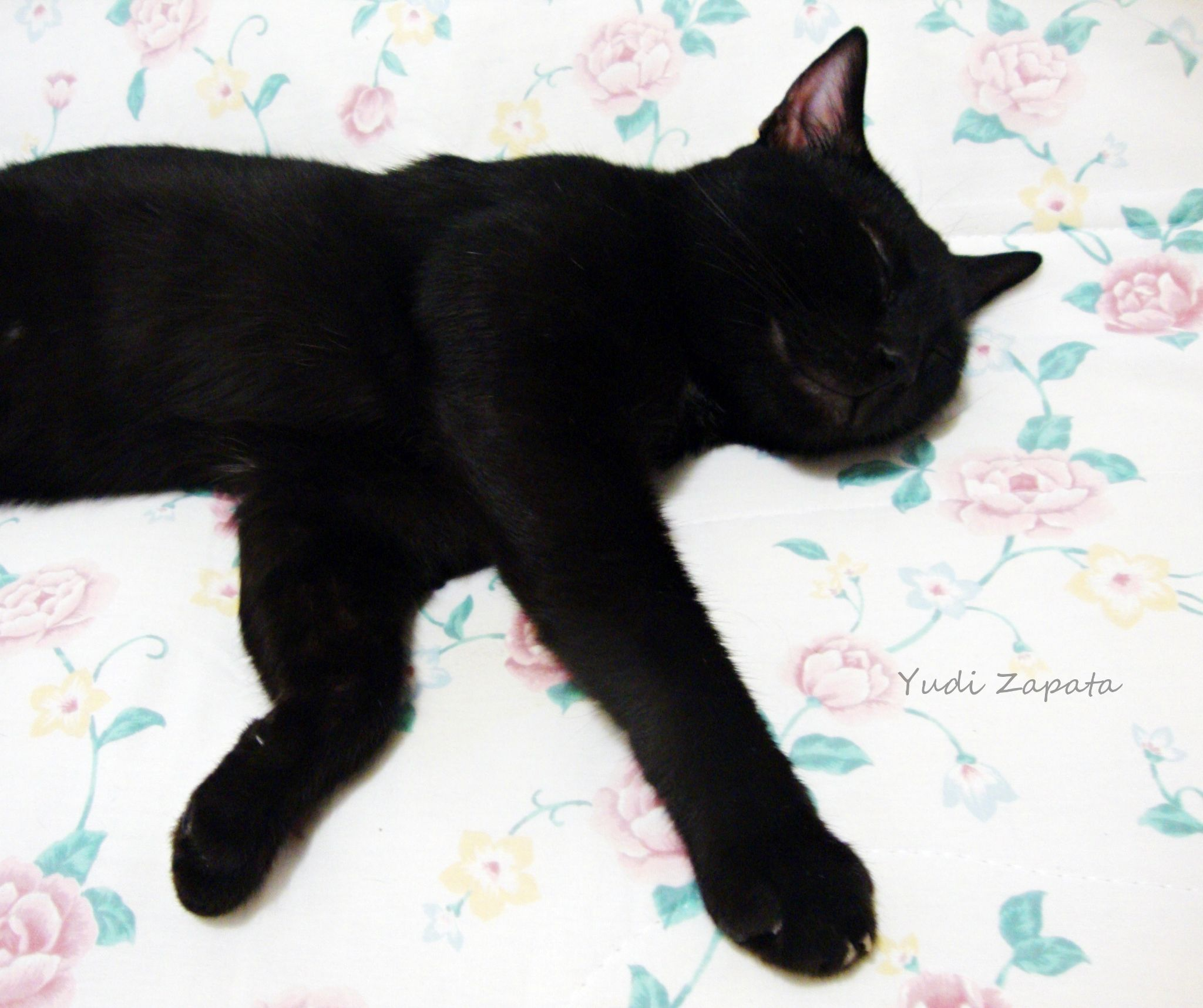 Sleeping by Yu Zapata