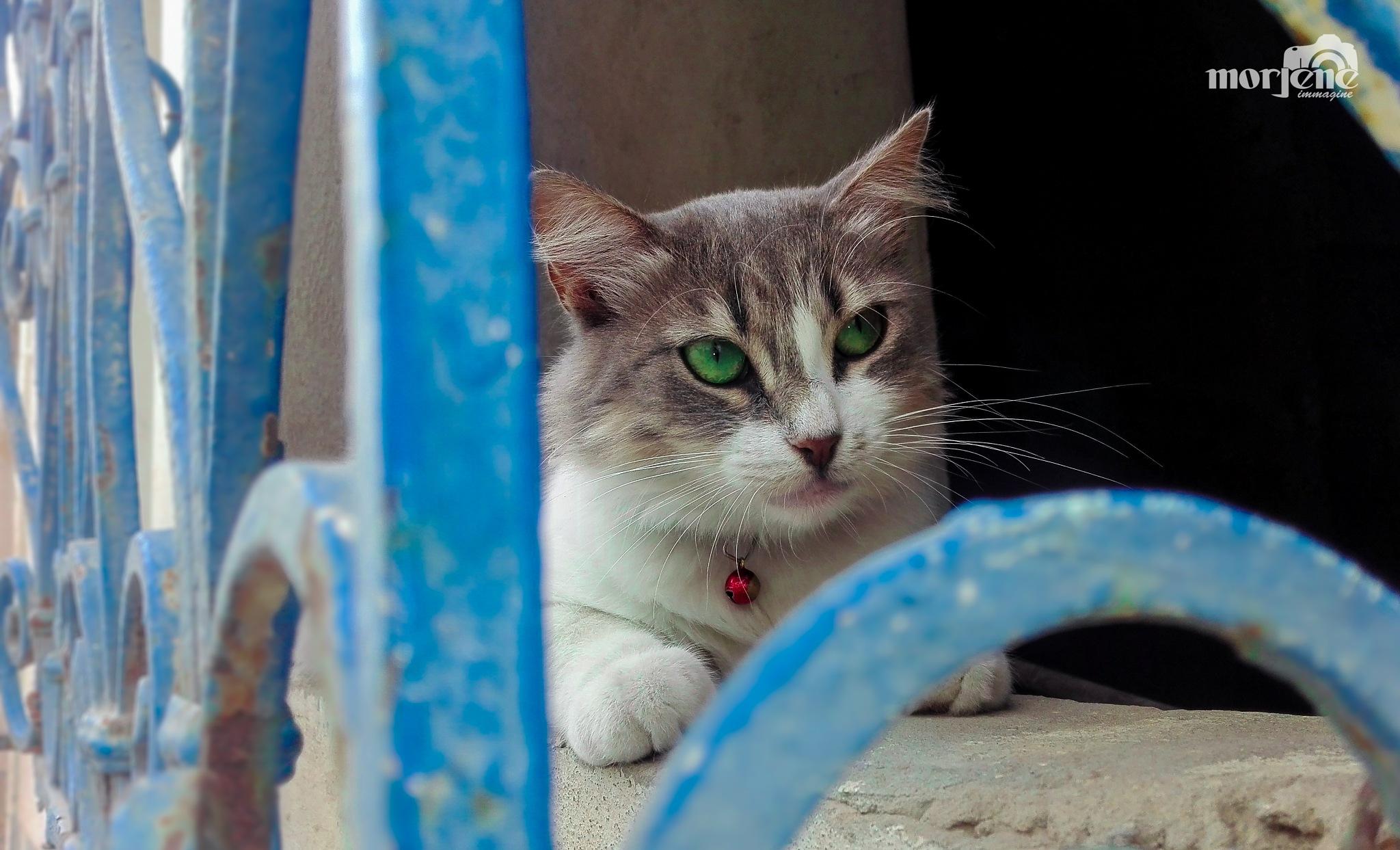 cat by Saif Morjene