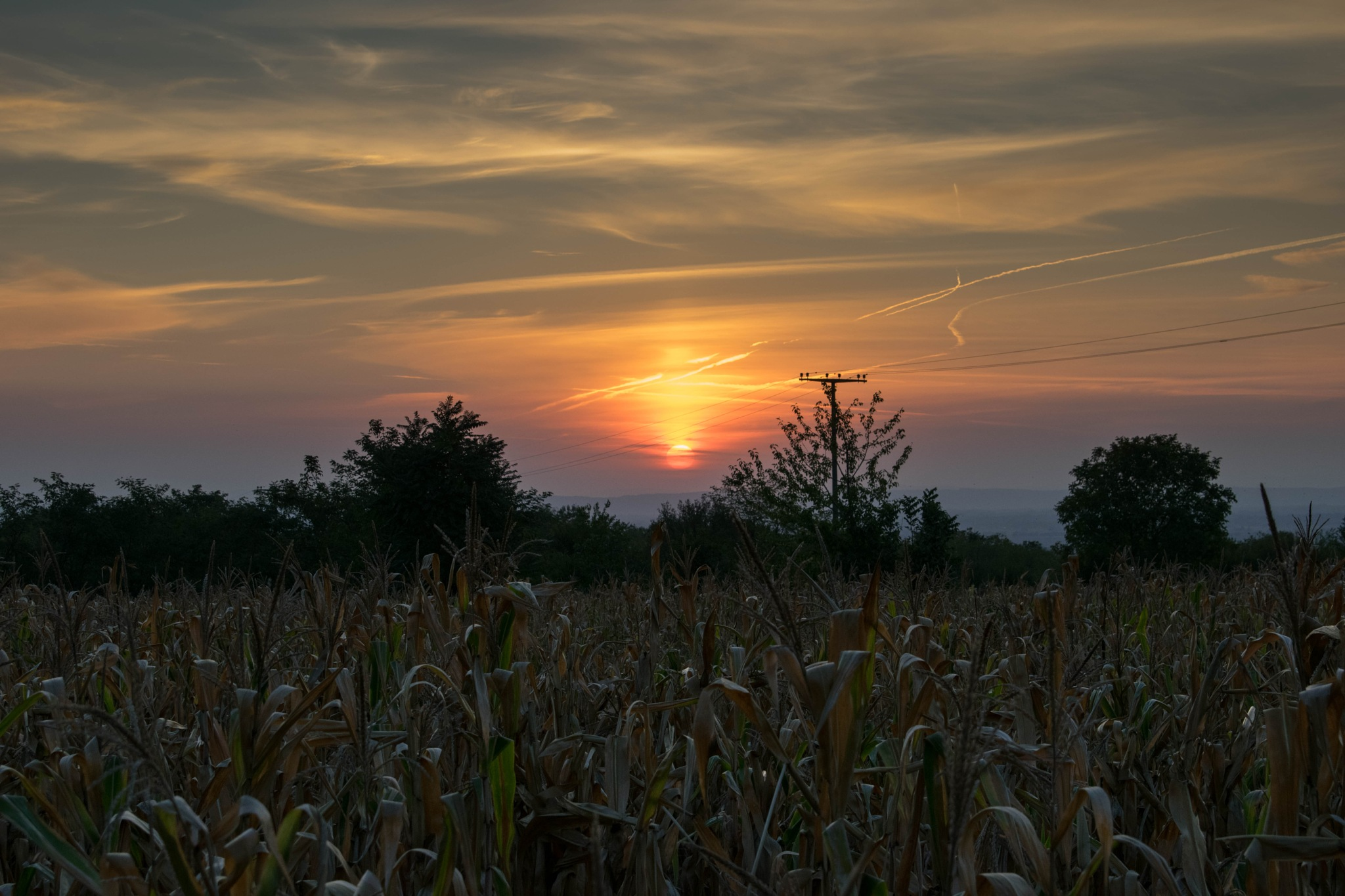 Sunrise over the cornfield by thecwazy