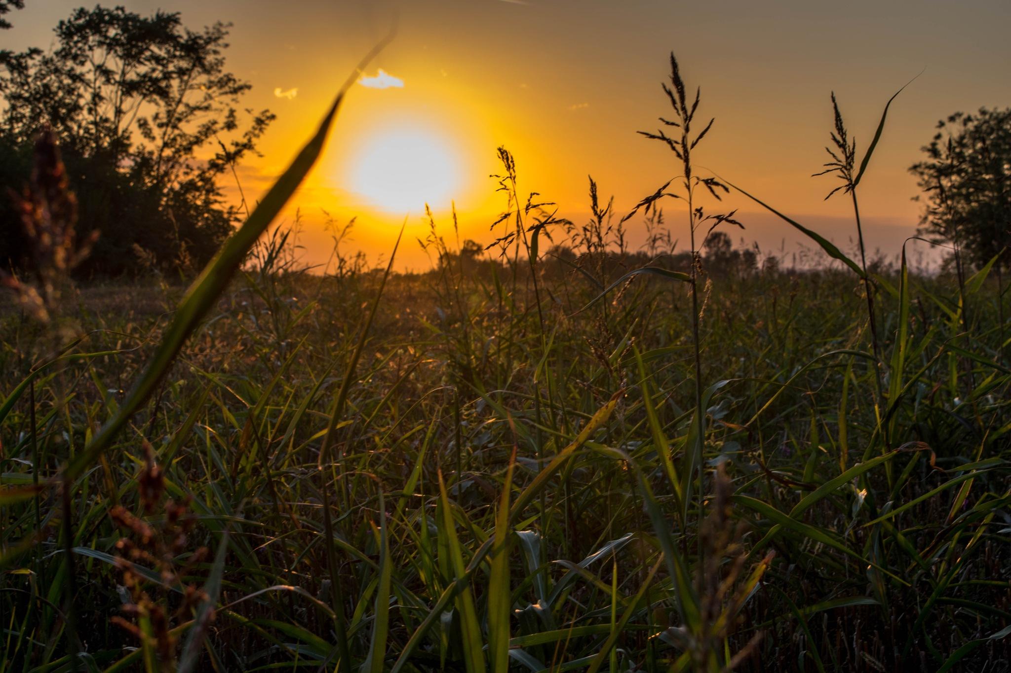 sunset by thecwazy
