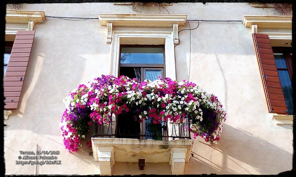 Flowers by Alfonso Palumbo