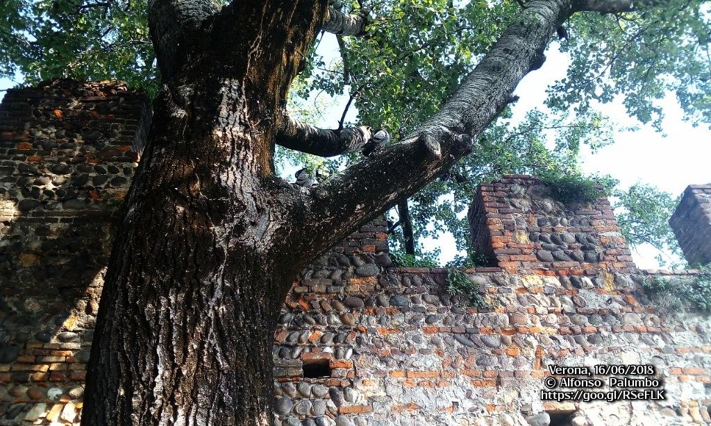 Tree by Alfonso Palumbo