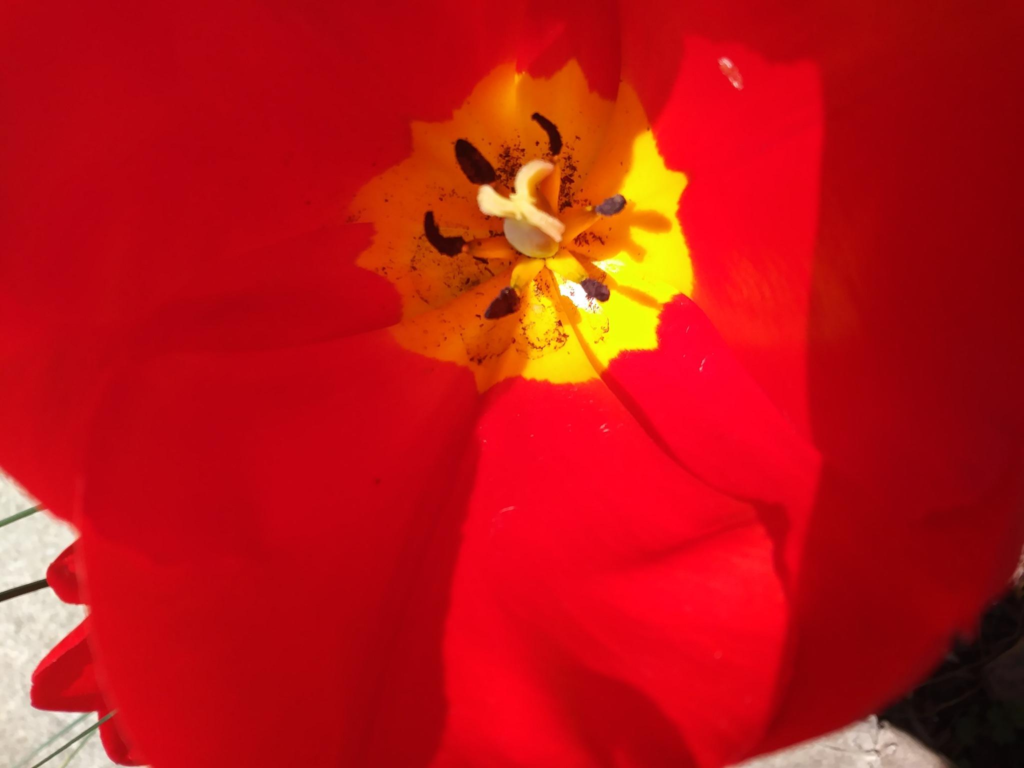 Red by Angela Mason