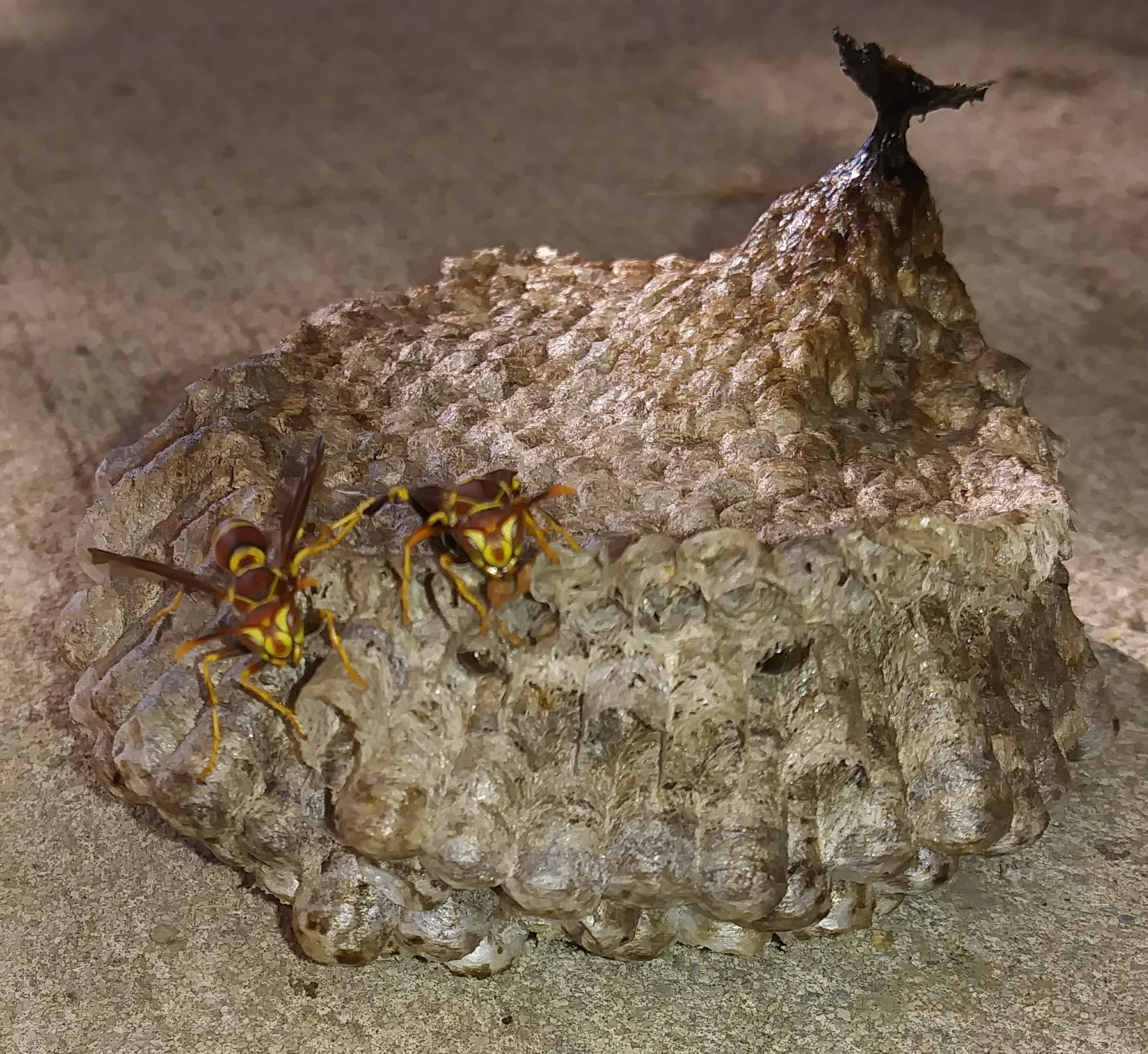 Fallen Nest1 by Angela Mason