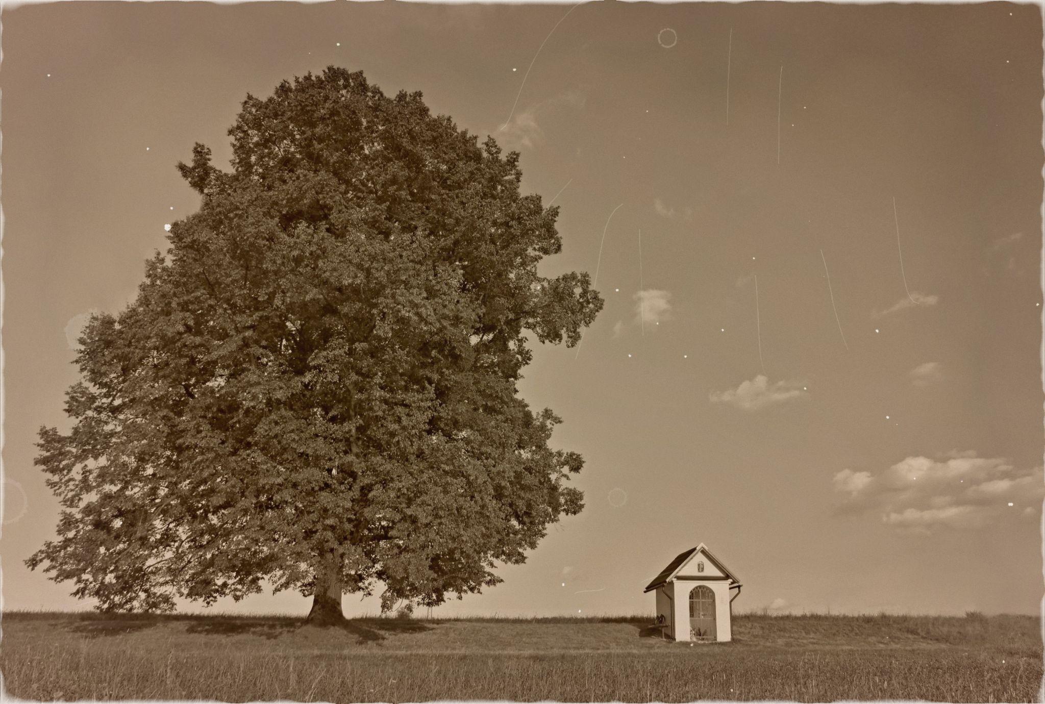 old tree by Stenly Priesol