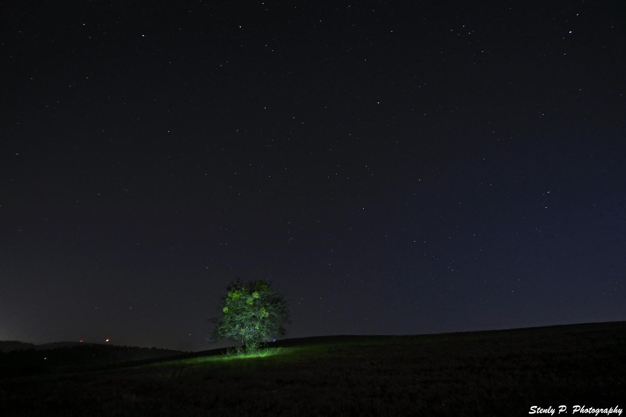 Photo in Astrophotography #night #stars #tree