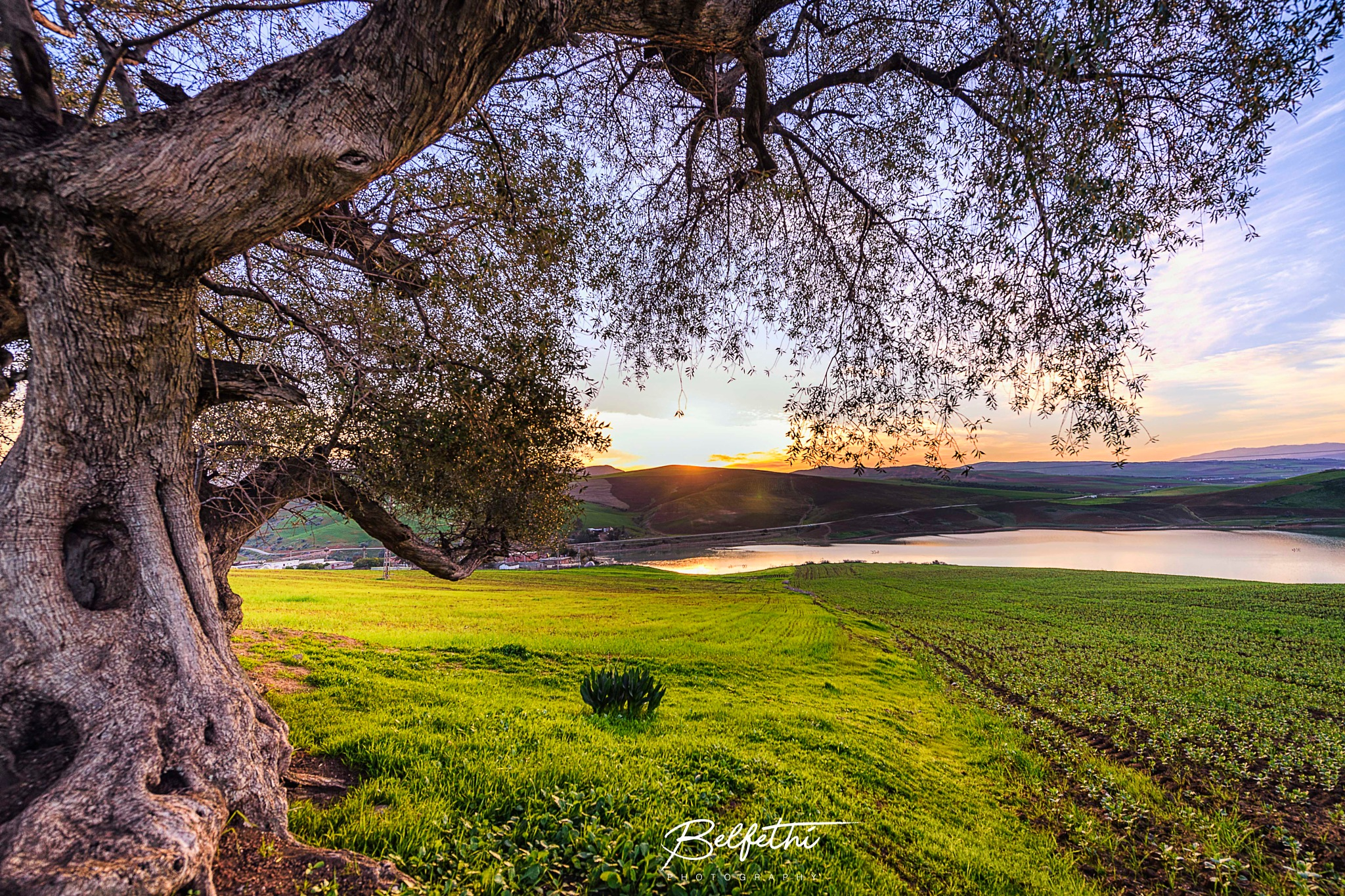 Under the tree look. by Noureddine Belfethi