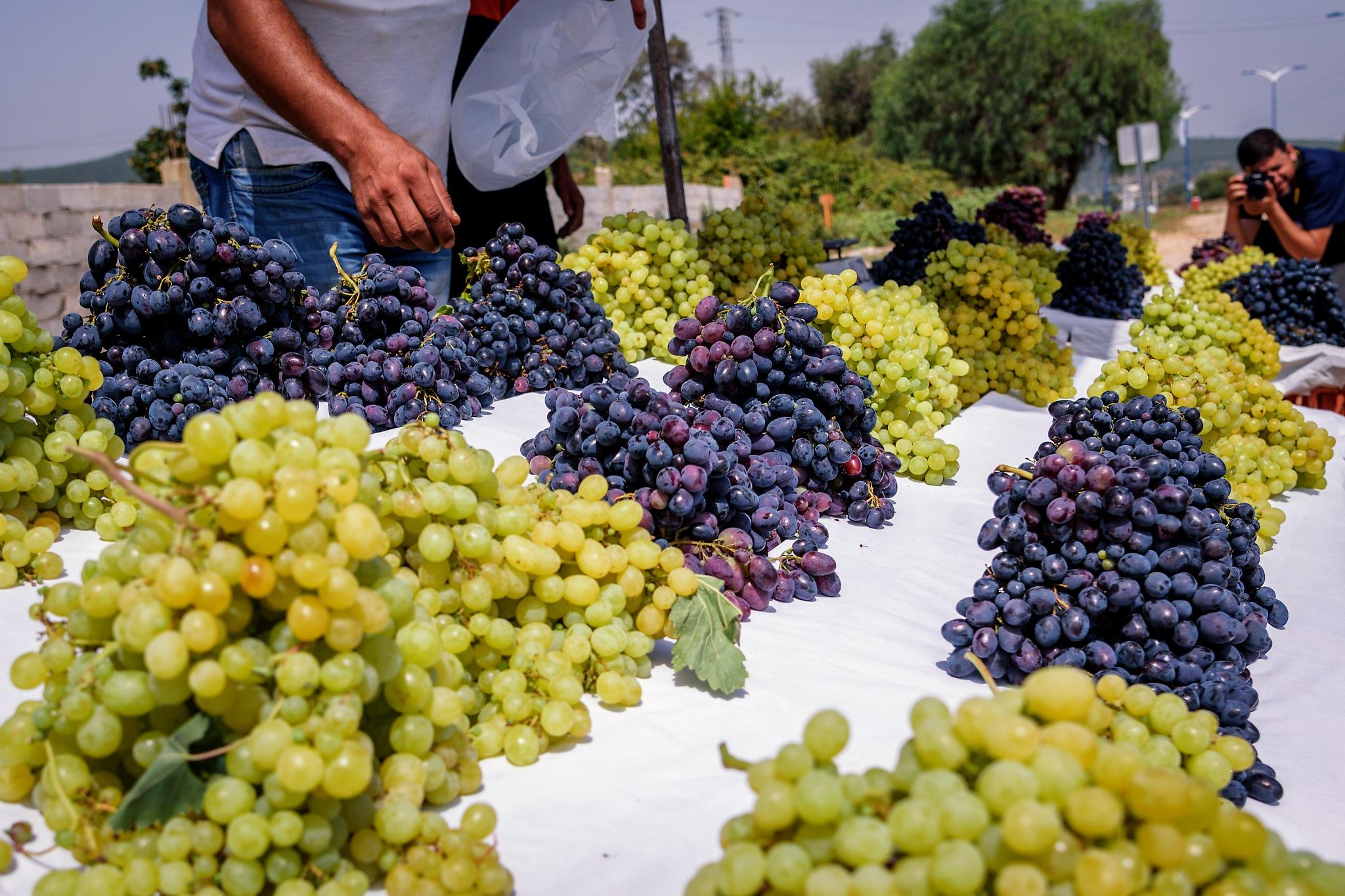 Grape by Noureddine Belfethi