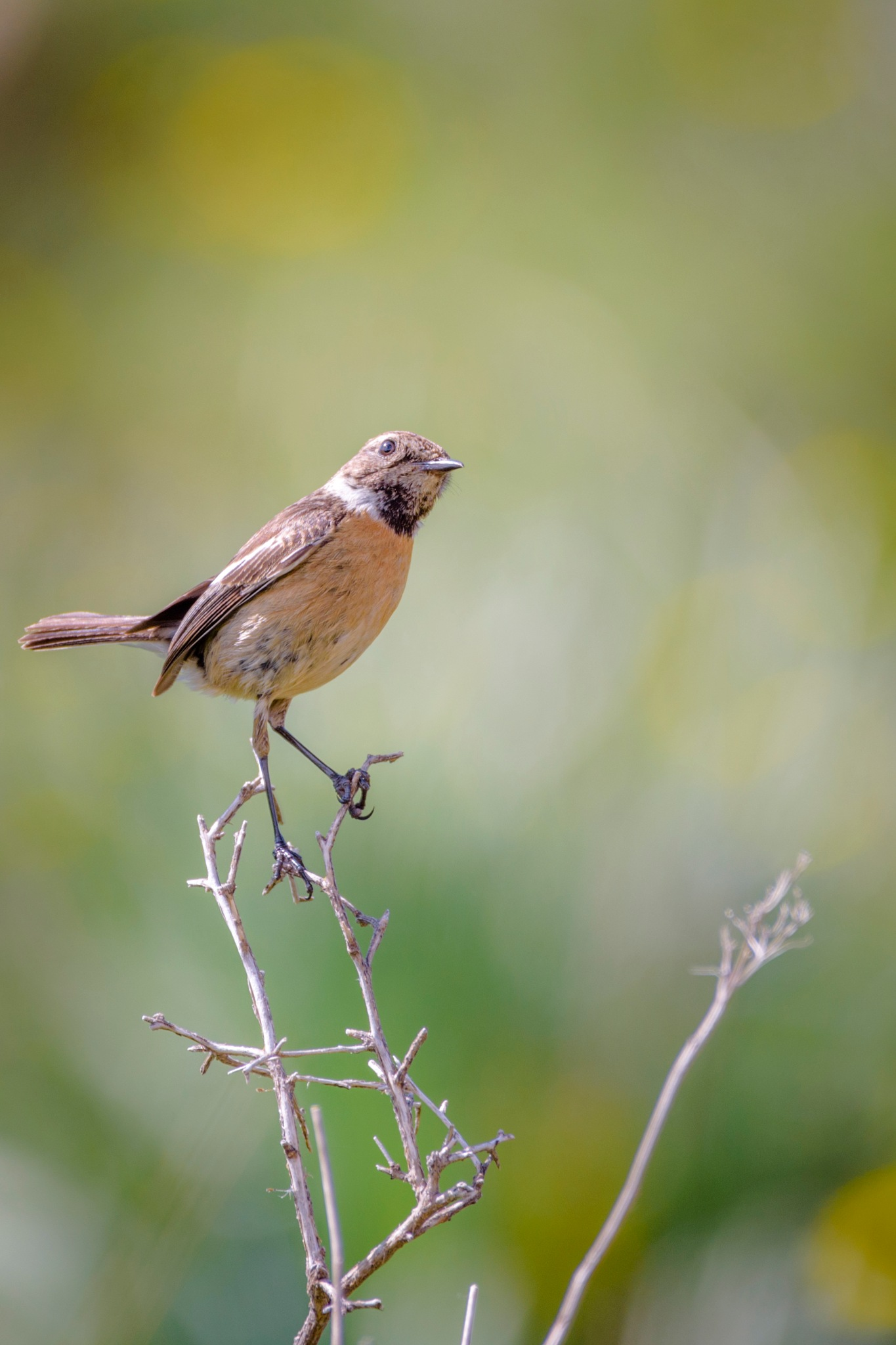 Bird by Noureddine Belfethi