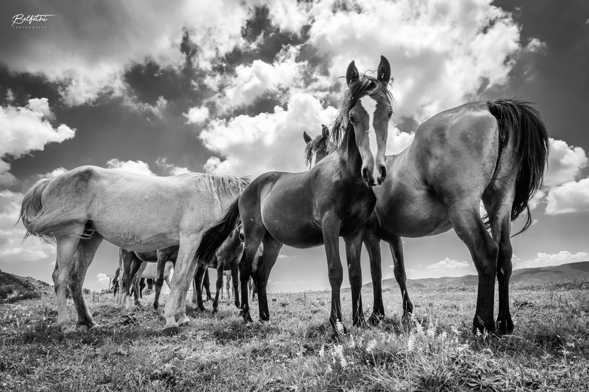 Horses by Noureddine Belfethi