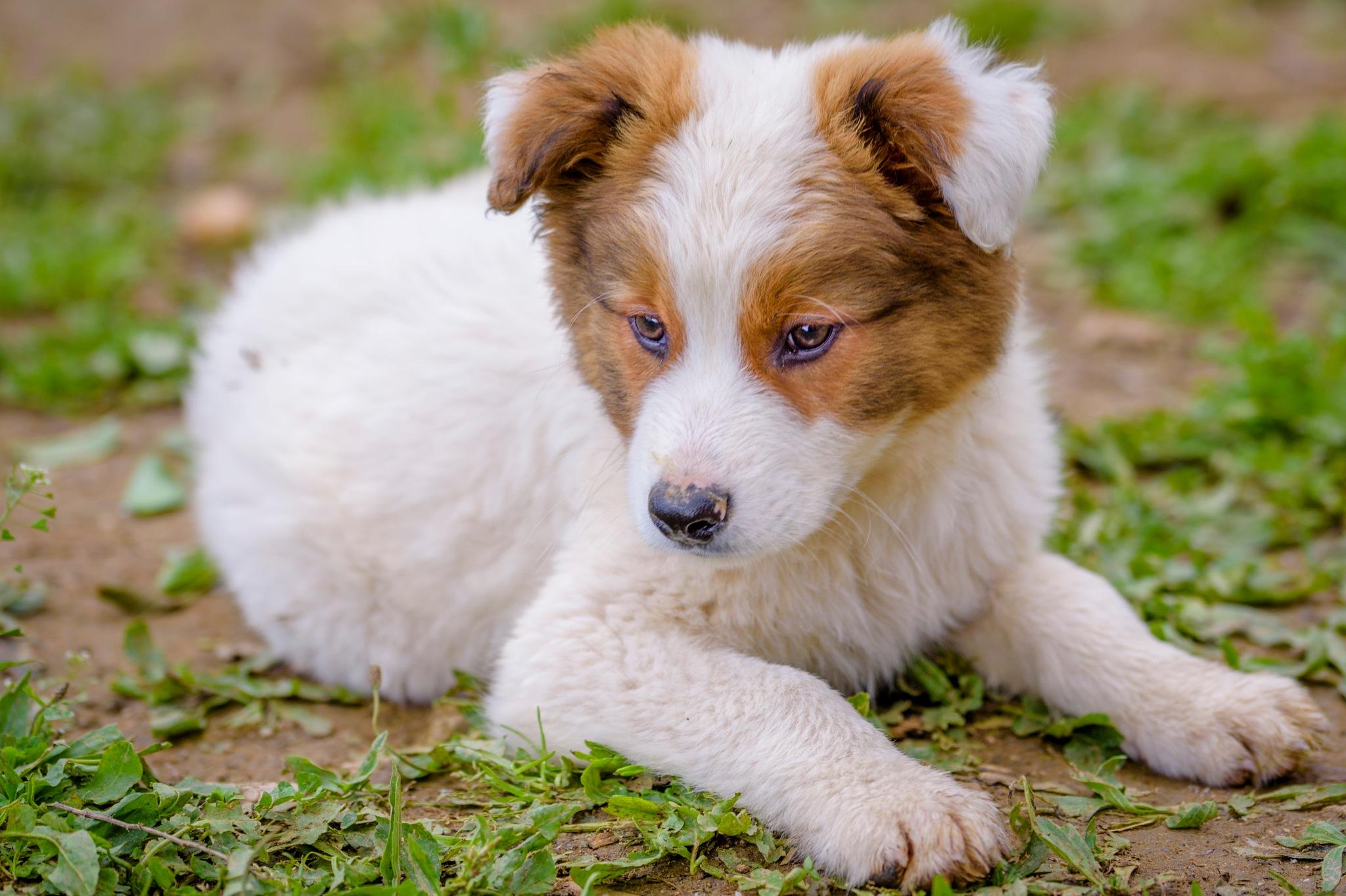 Dog by Noureddine Belfethi