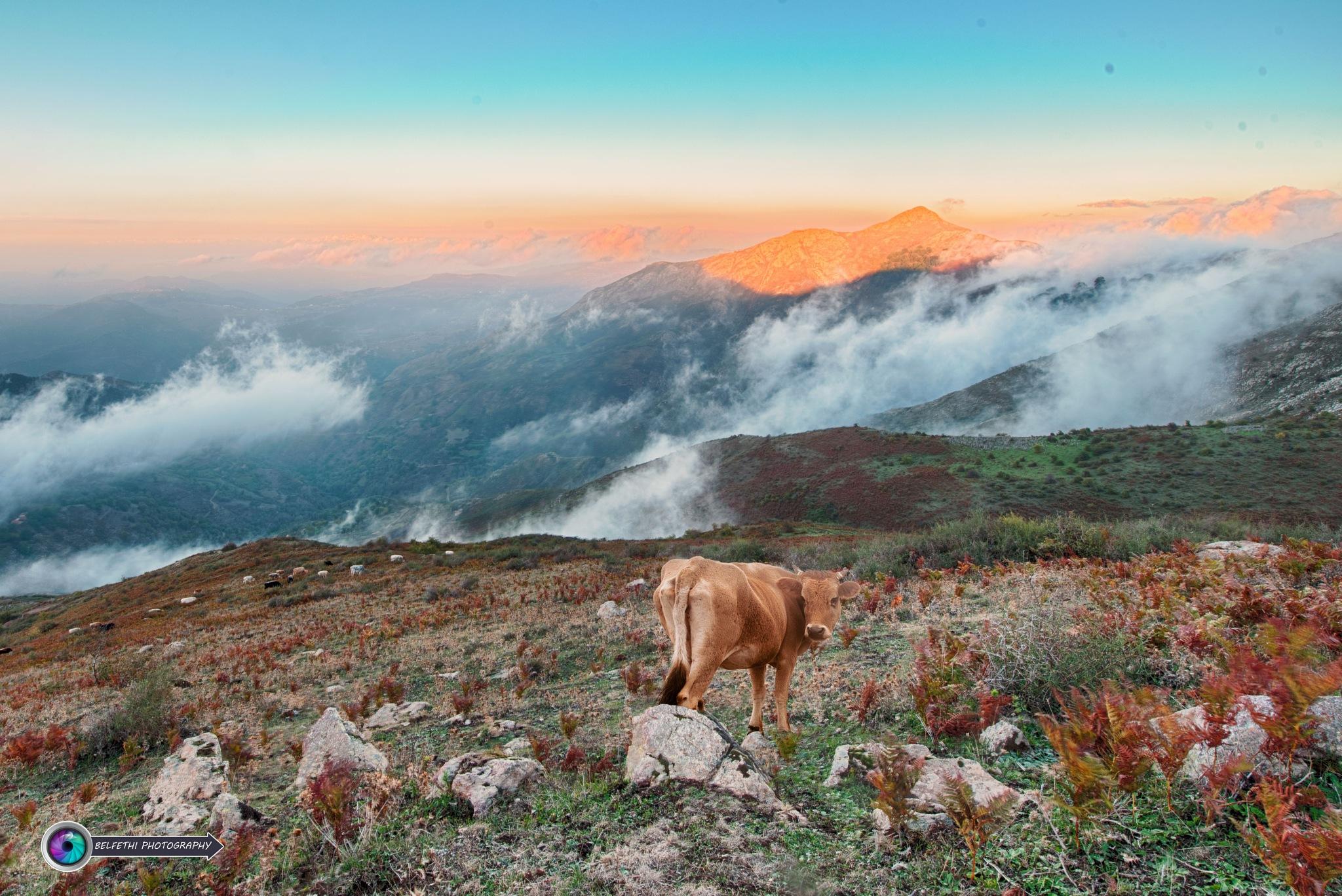 Landscape by Noureddine Belfethi