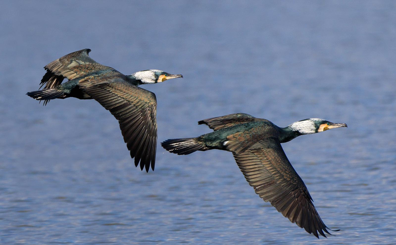 Enjoying a thrilling flying t!!! by Sotiris Siomis