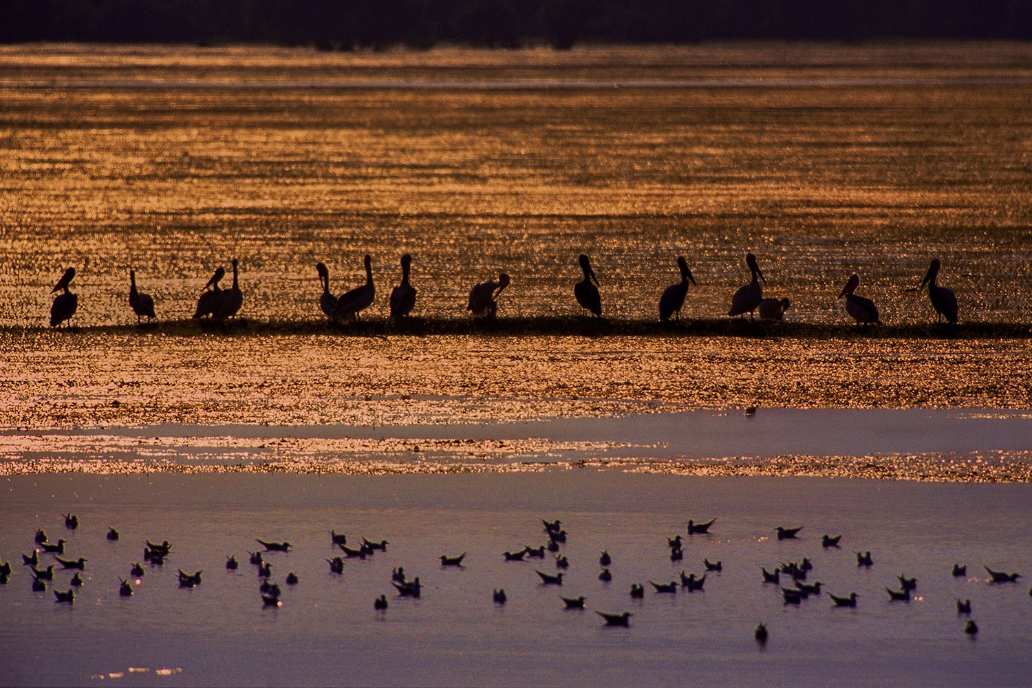 Magical sunset and the pelicans by Sotiris Siomis