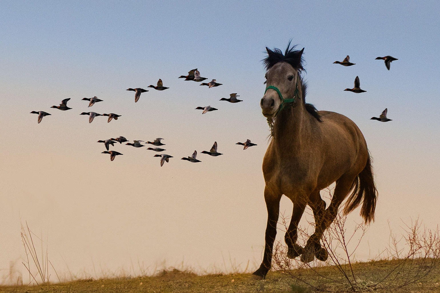Photo in Animal #horse #proud #freedom #flying #gallop #birds #ducks #greece