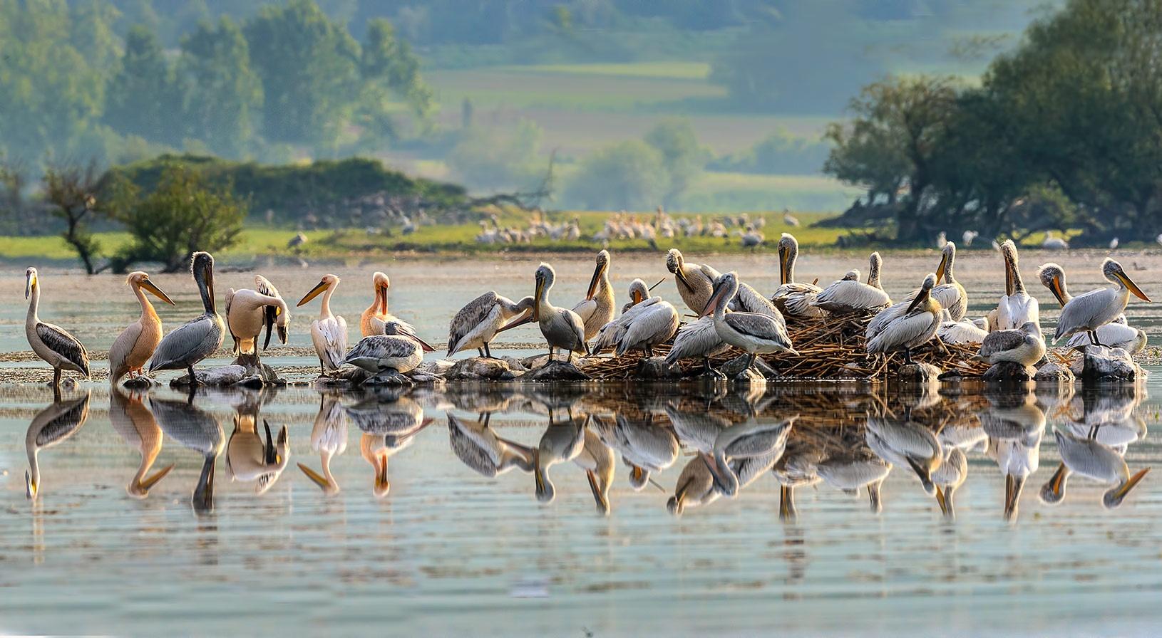 The wonderful world of birds. by Sotiris Siomis