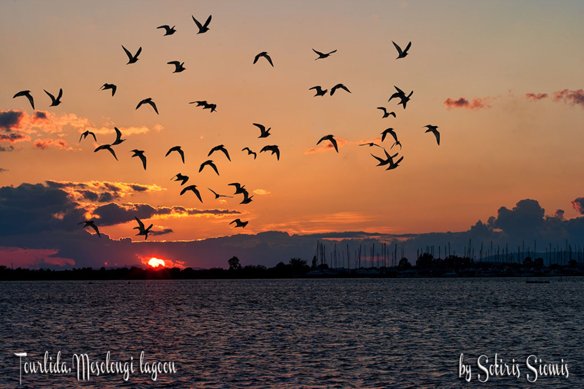 Birds in sunset by Sotiris Siomis
