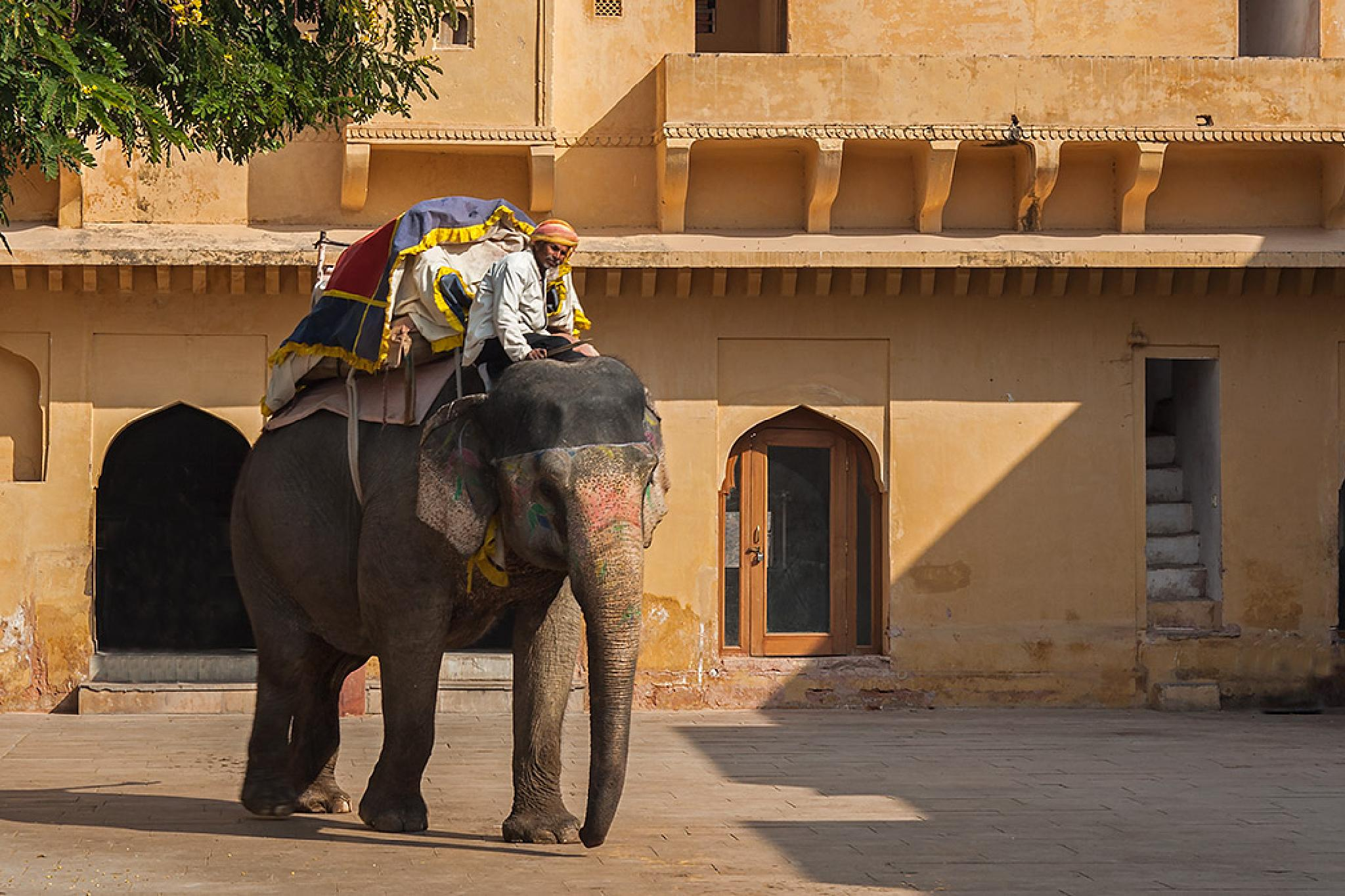 Elephant, Amer Fort Jaipur by Sotiris Siomis
