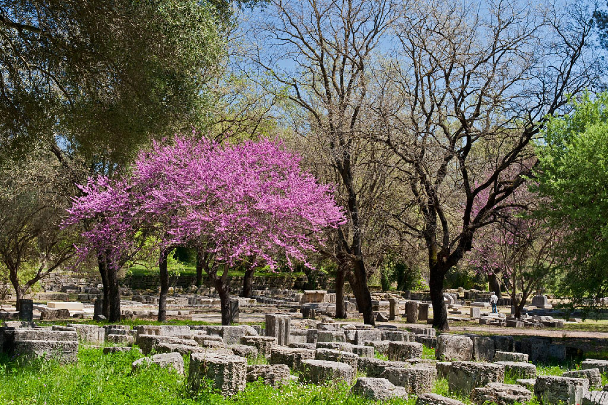 Spring in ancient Olympia by Sotiris Siomis