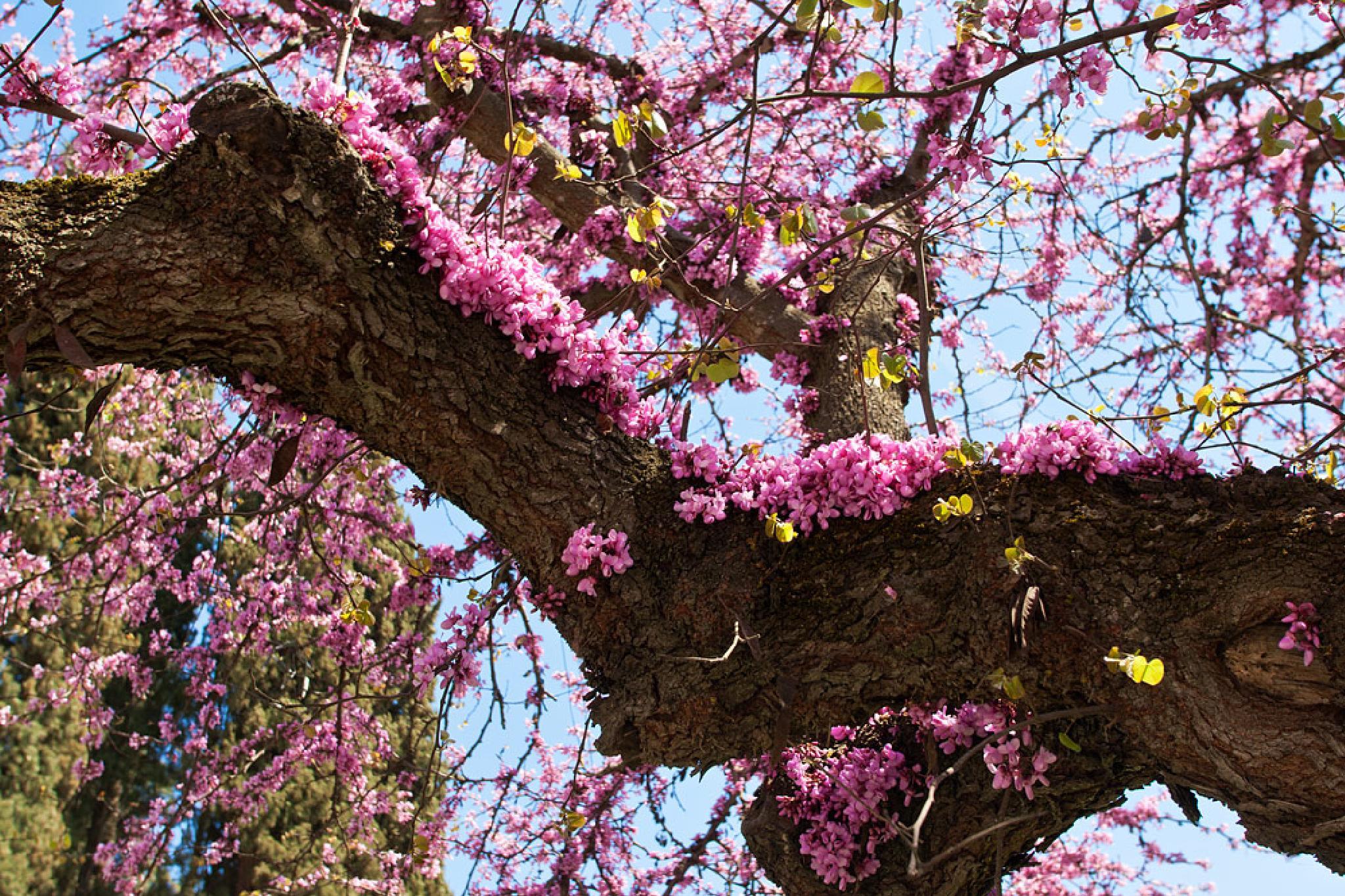 Oh my sweet spring!!!! by Sotiris Siomis