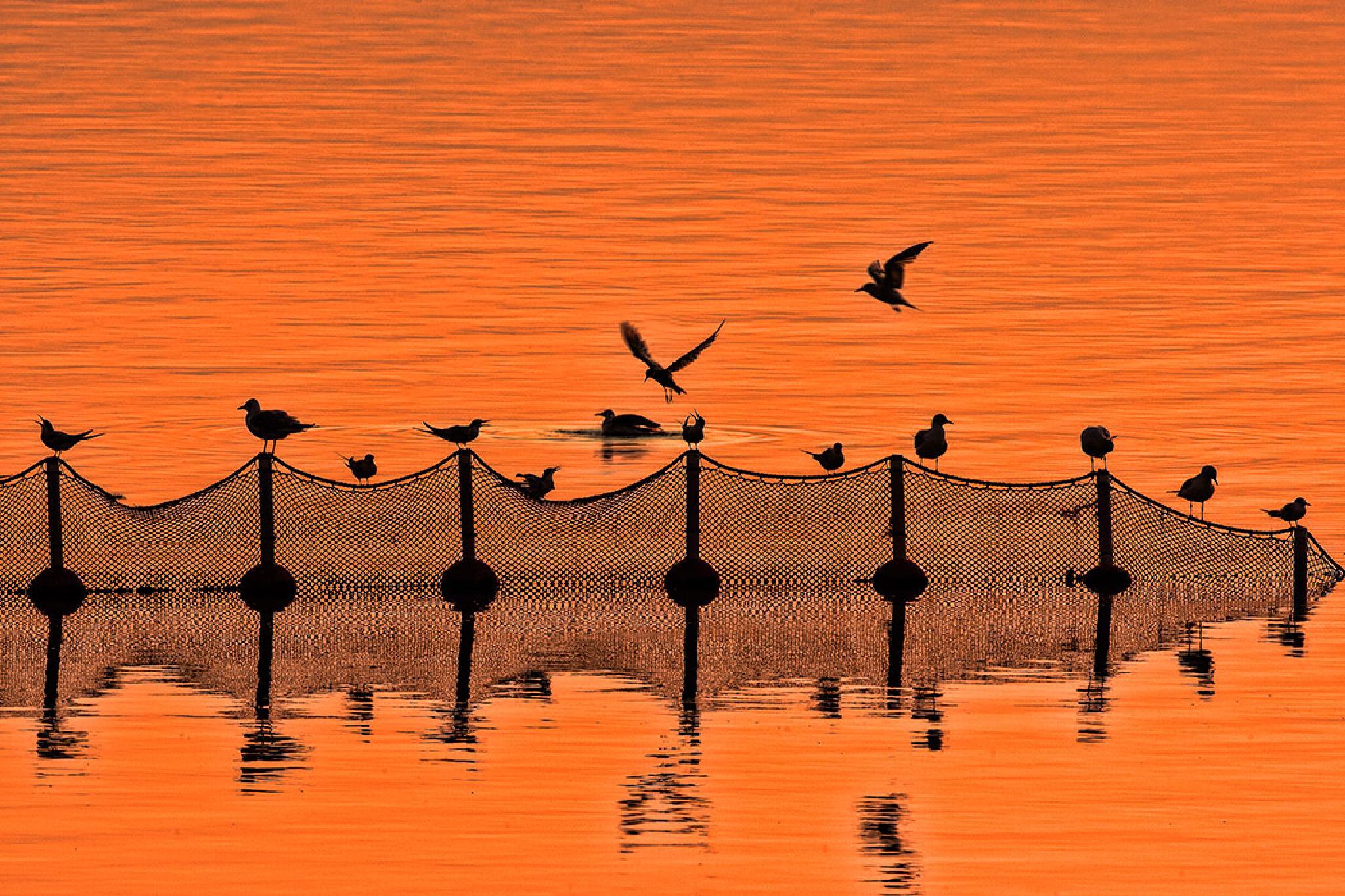 Sunrise, the birds by Sotiris Siomis