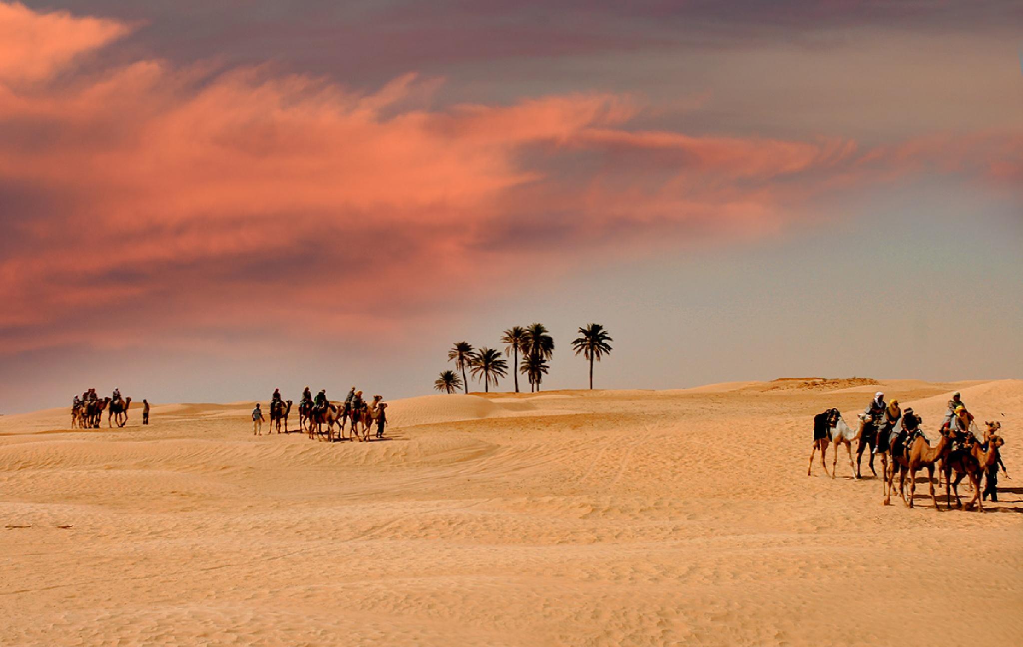 Sunset, Camel Caravans  by Sotiris Siomis