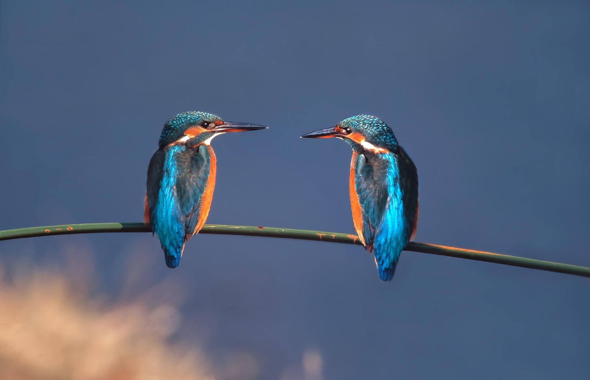 The free birds die singing!!!  by Sotiris Siomis