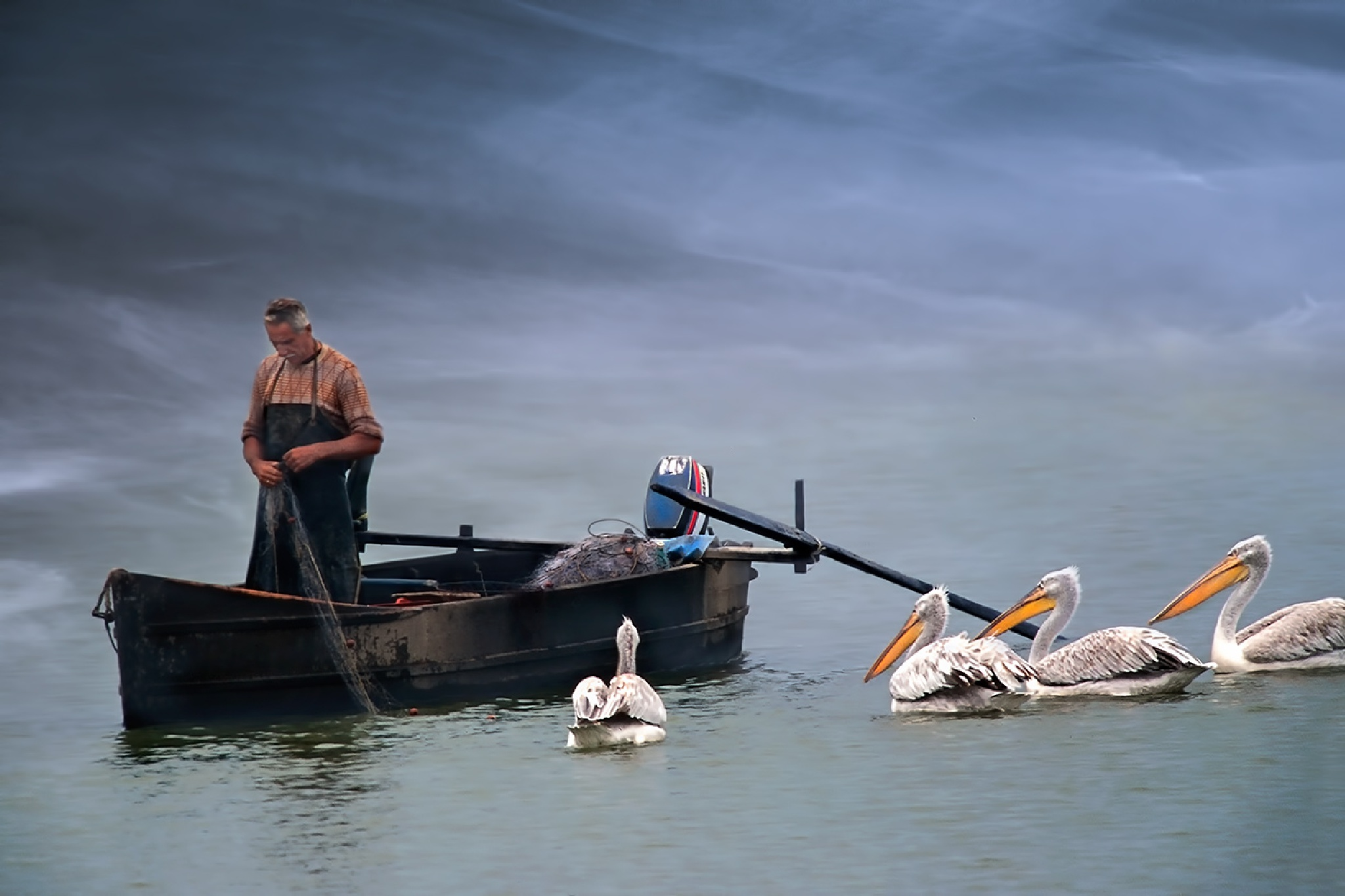 waiting for fish from fisherman by Sotiris Siomis