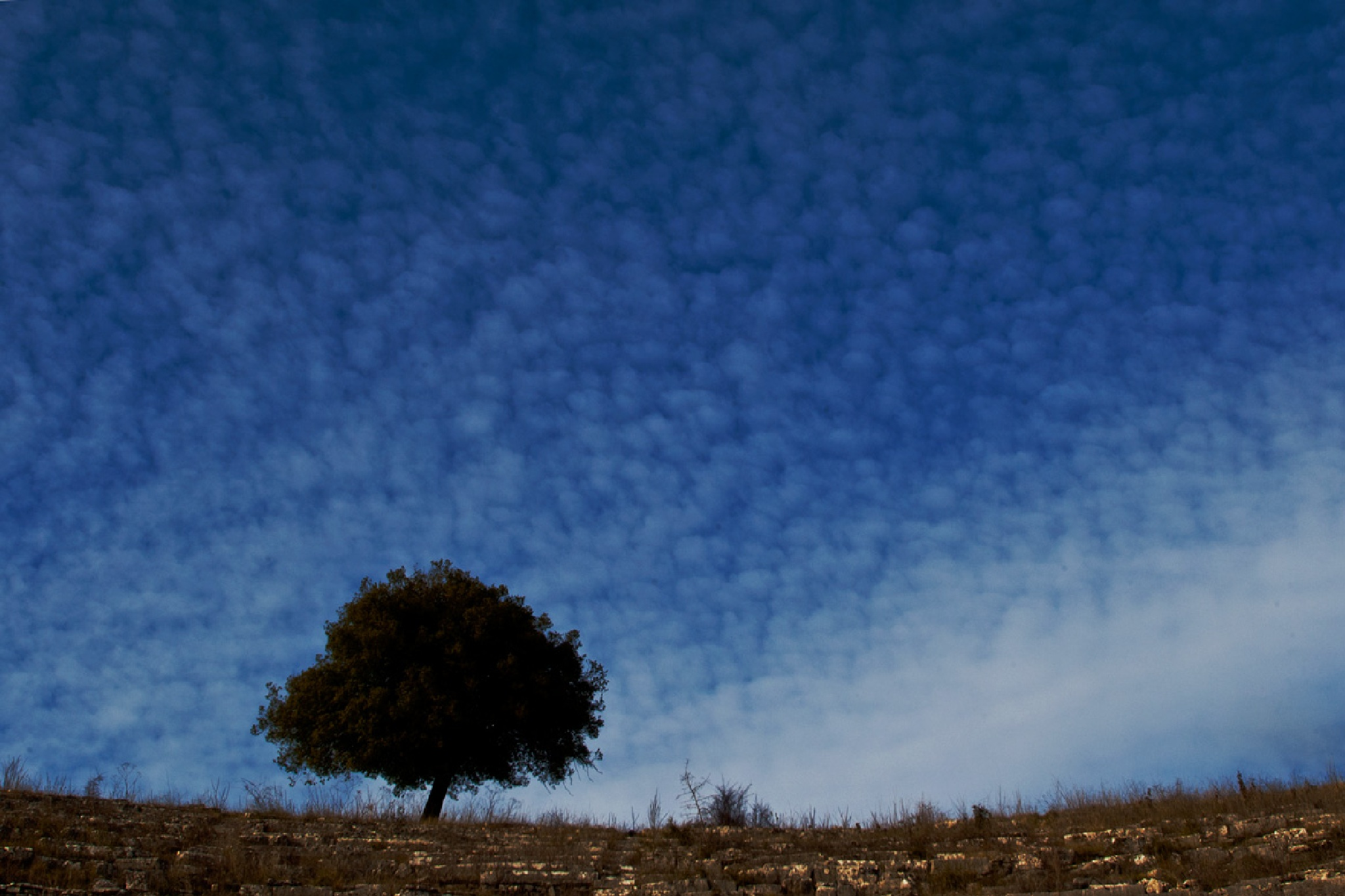 To live! like a tree alone and free...!!! by Sotiris Siomis