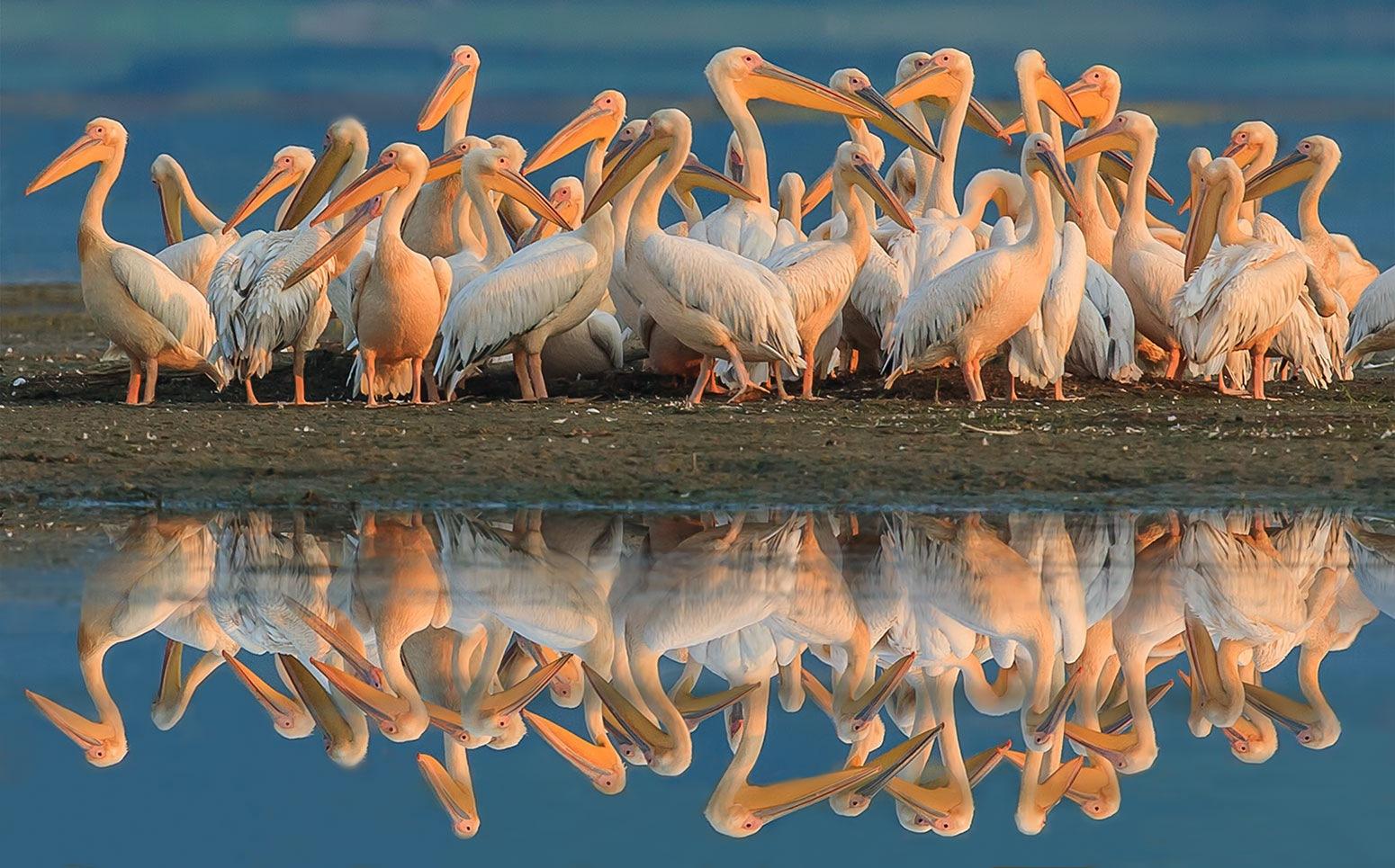 white pelicans!!!!  by Sotiris Siomis