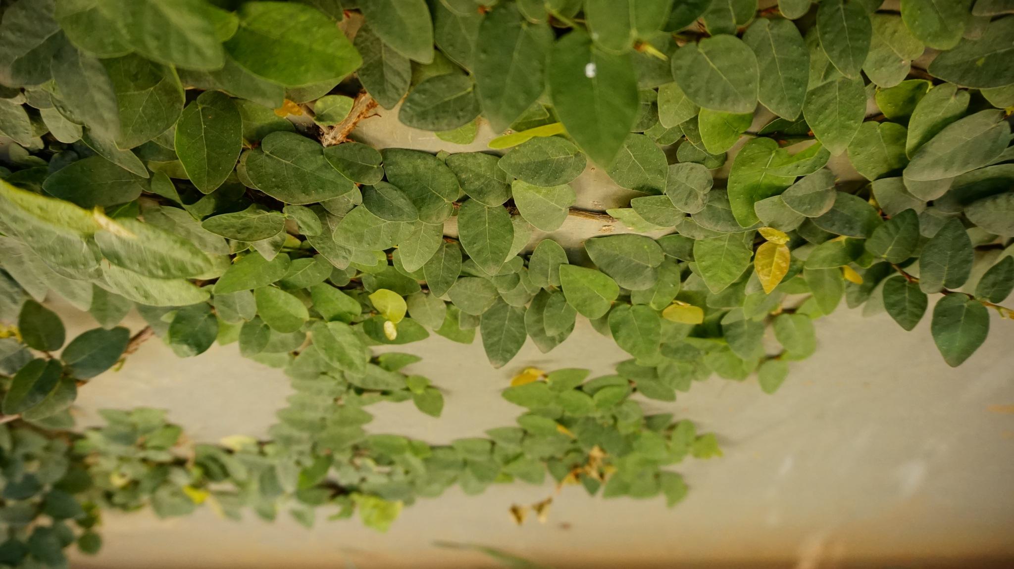 leaves by marineguyy