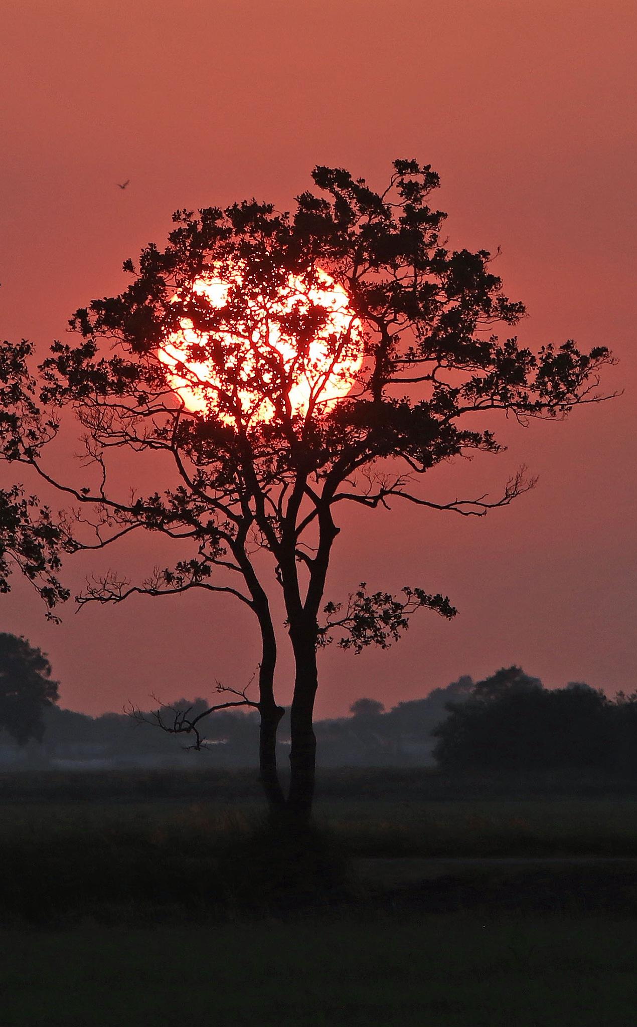 warm sun by Jeroen Wouter van der Vlist