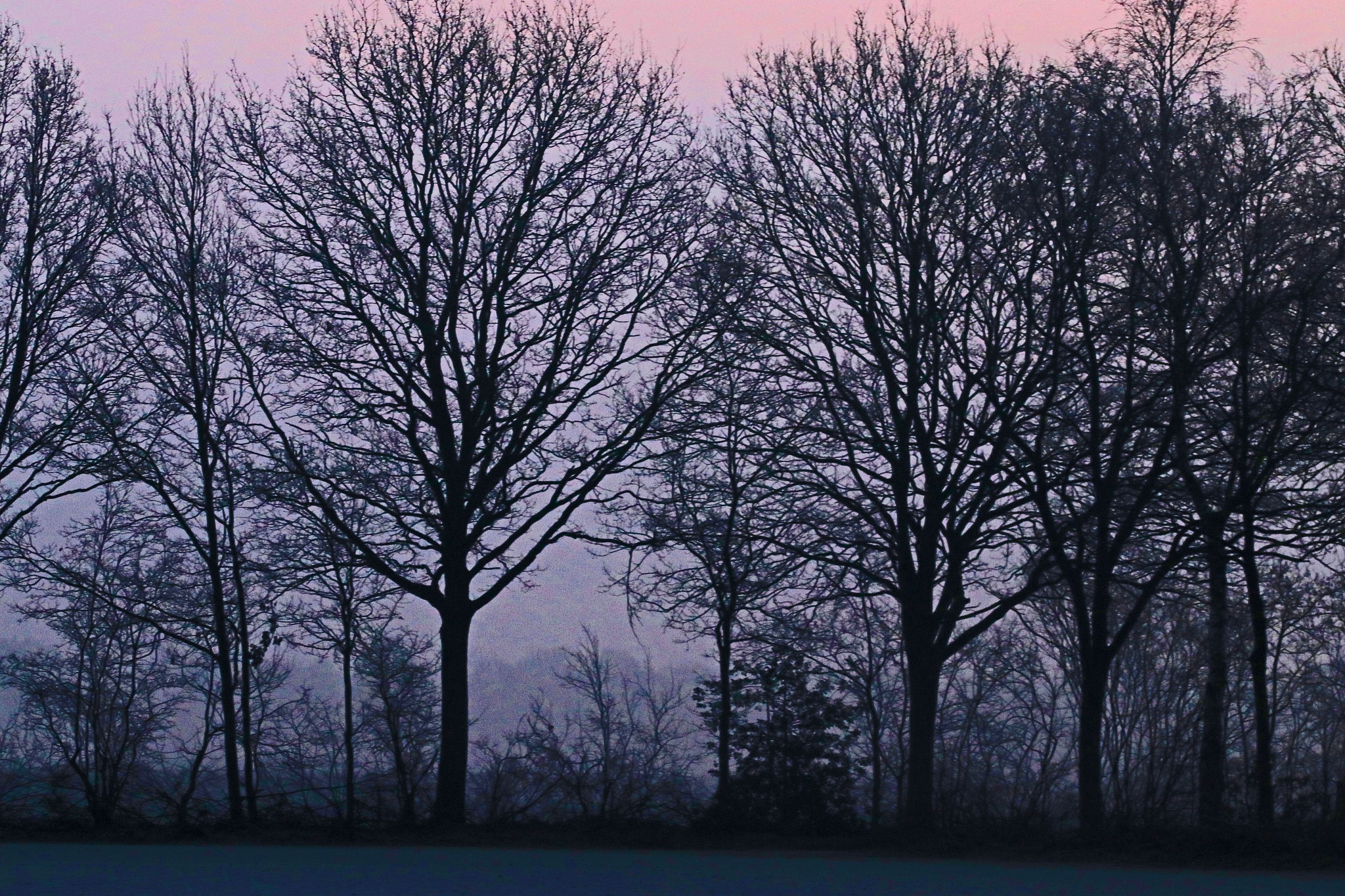 trees in the morning by Jeroen Wouter van der Vlist