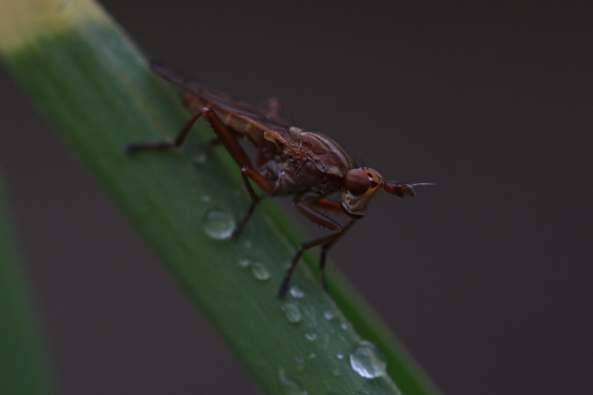 musquito by Jeroen Wouter van der Vlist