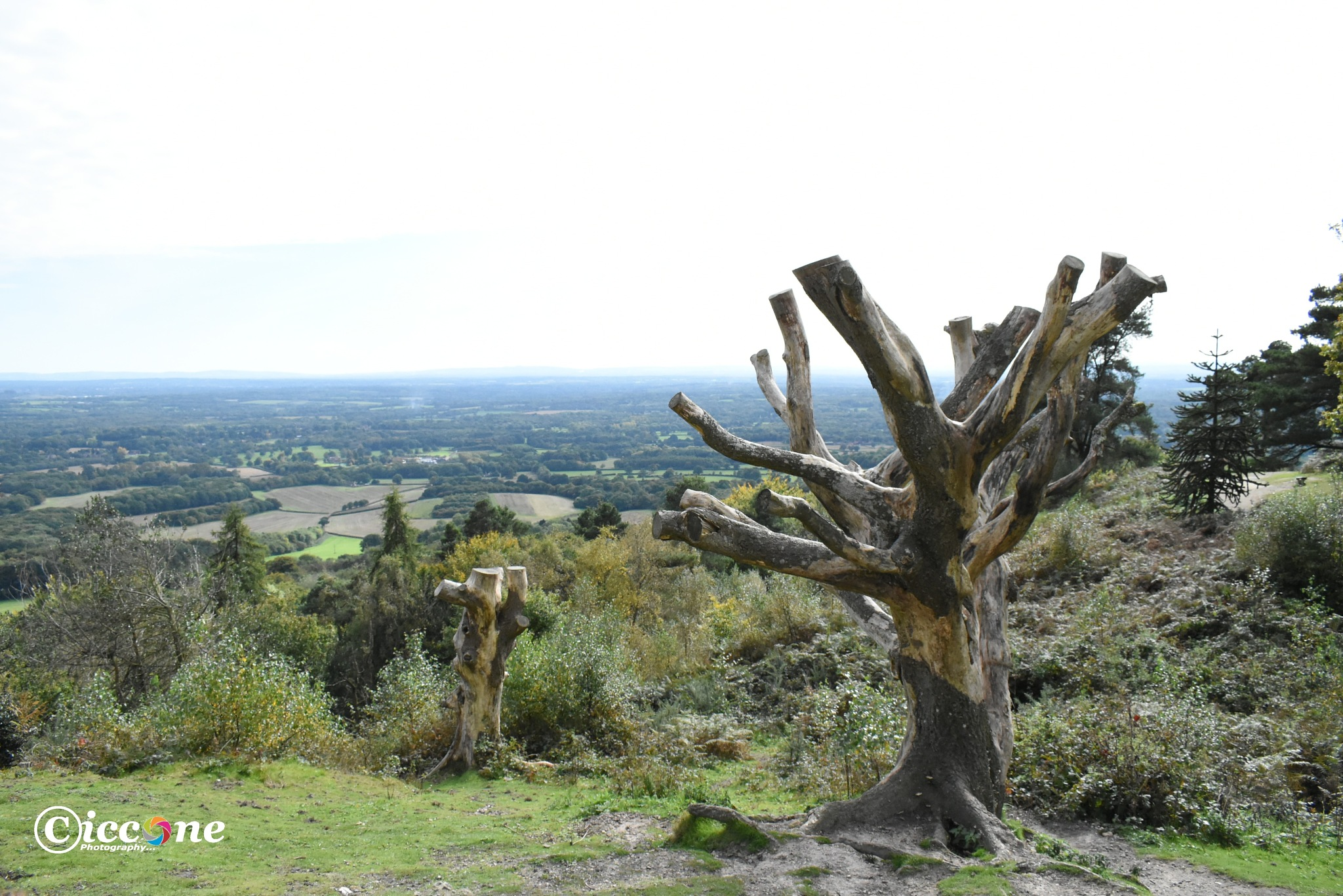 View From Leith Hill Tower by Marc Ciccone