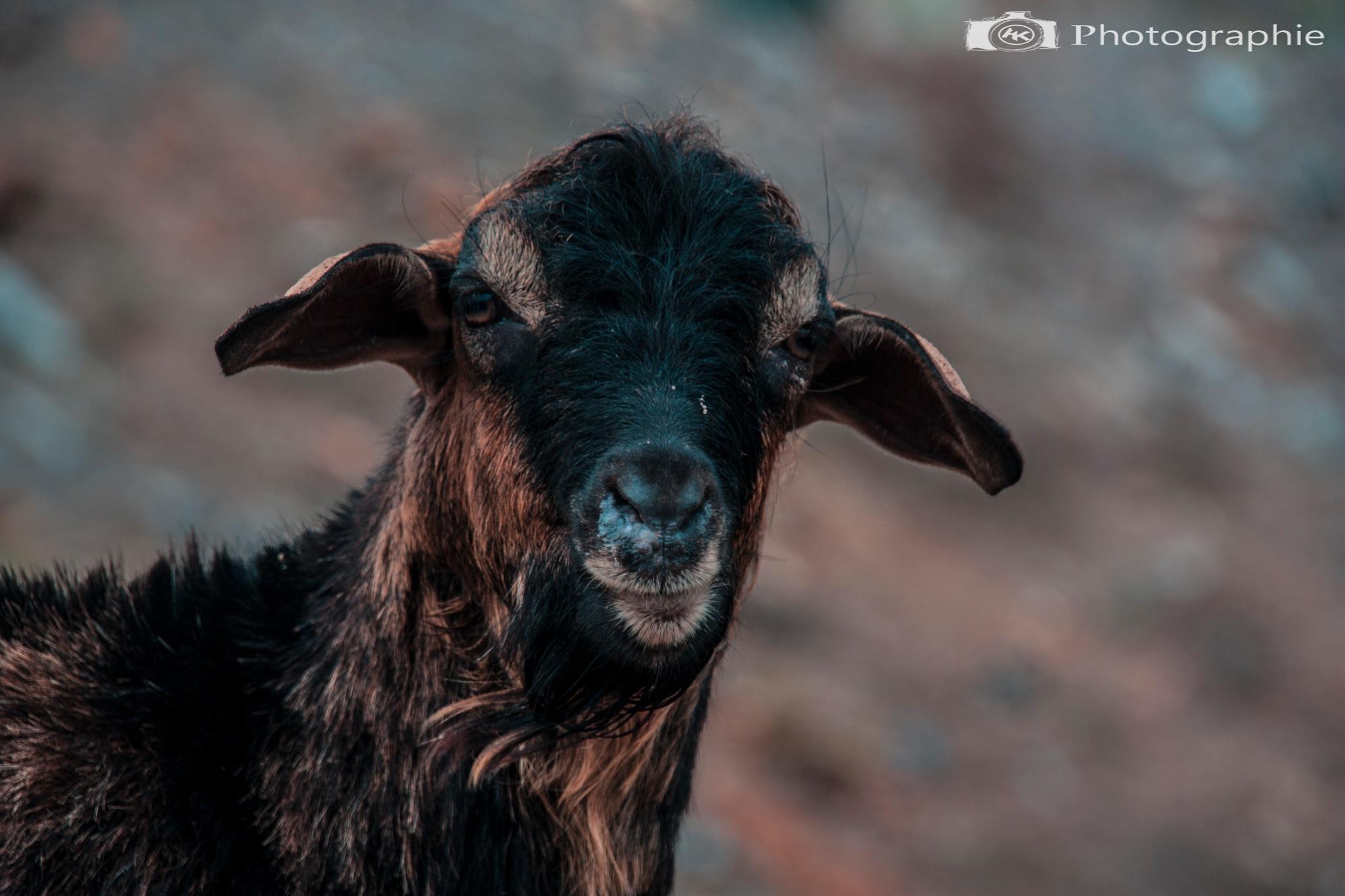 A-K photographe  by Abdel Kader
