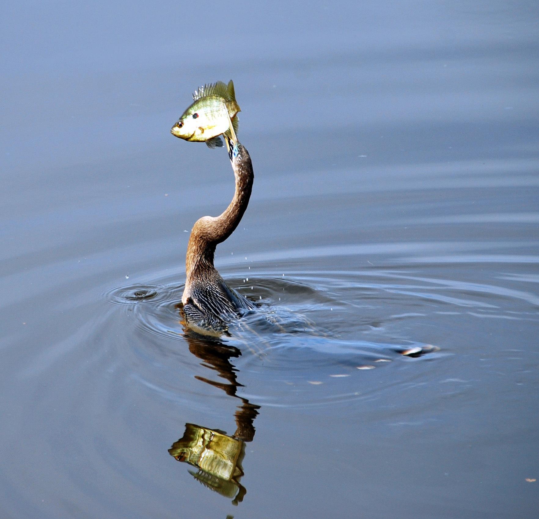 Hungry Bird by Tom Priestley