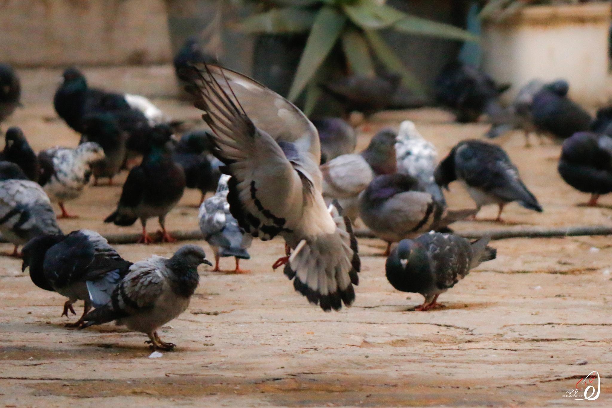 الطائر الراقص by Hisham Twhed