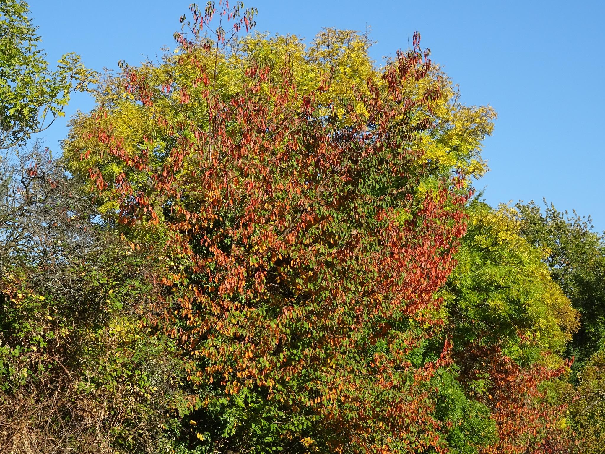 Autumn by Kelisa