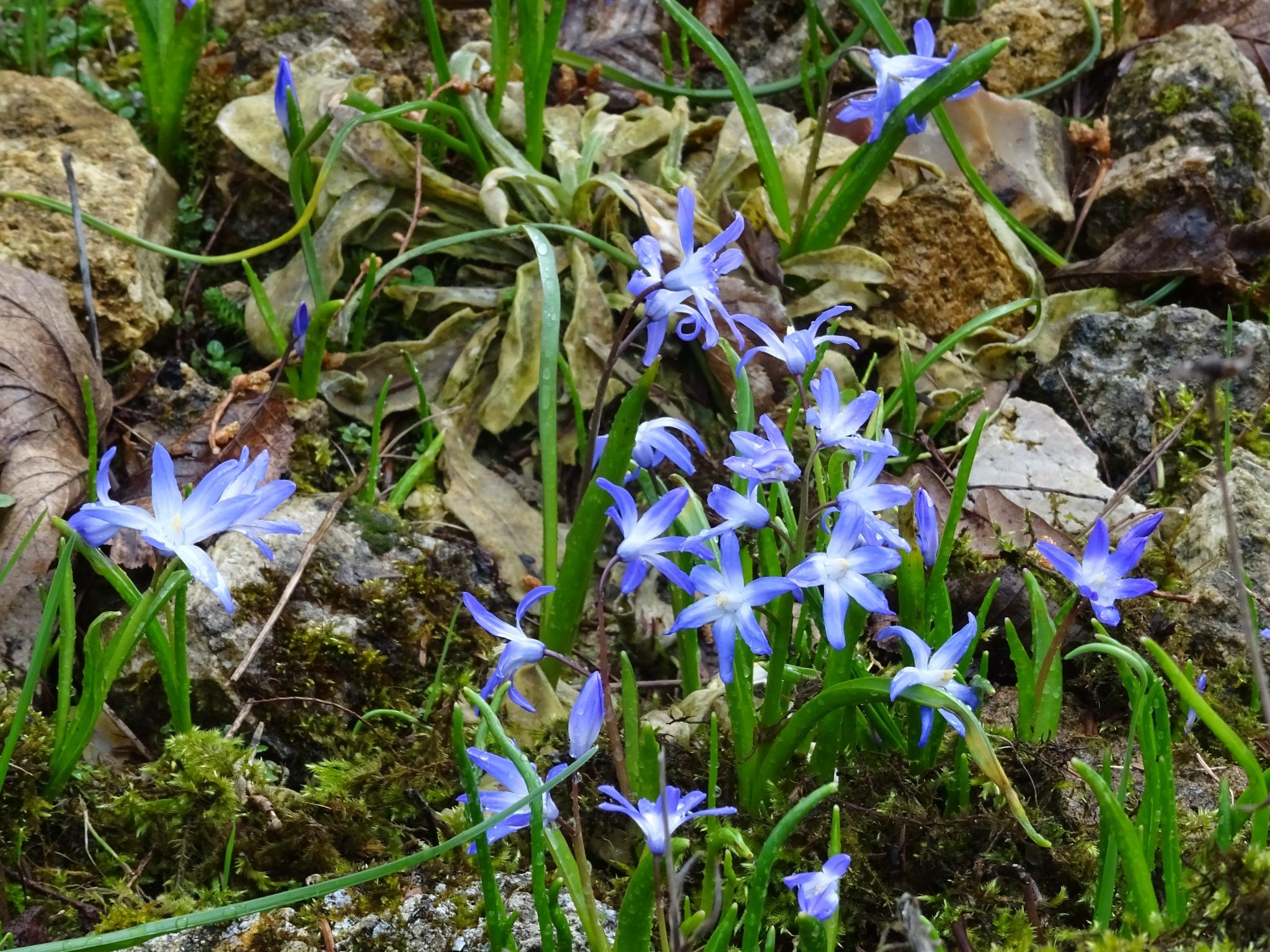 Blue Flowers by Kelisa