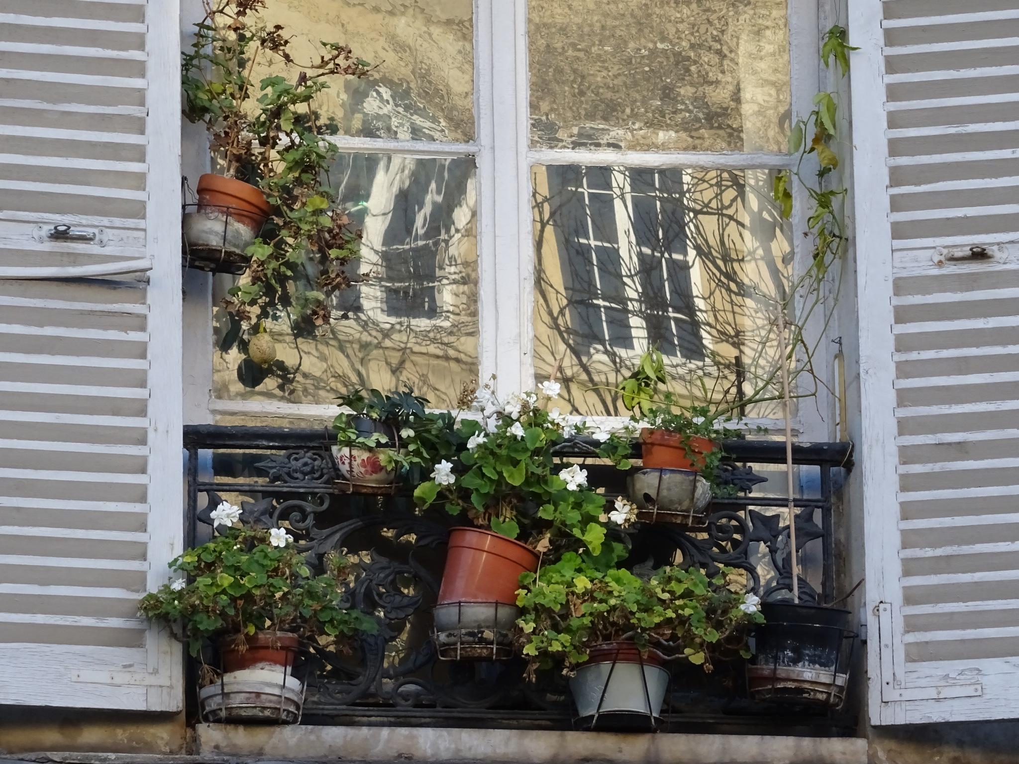 Window & Flowers by Kelisa