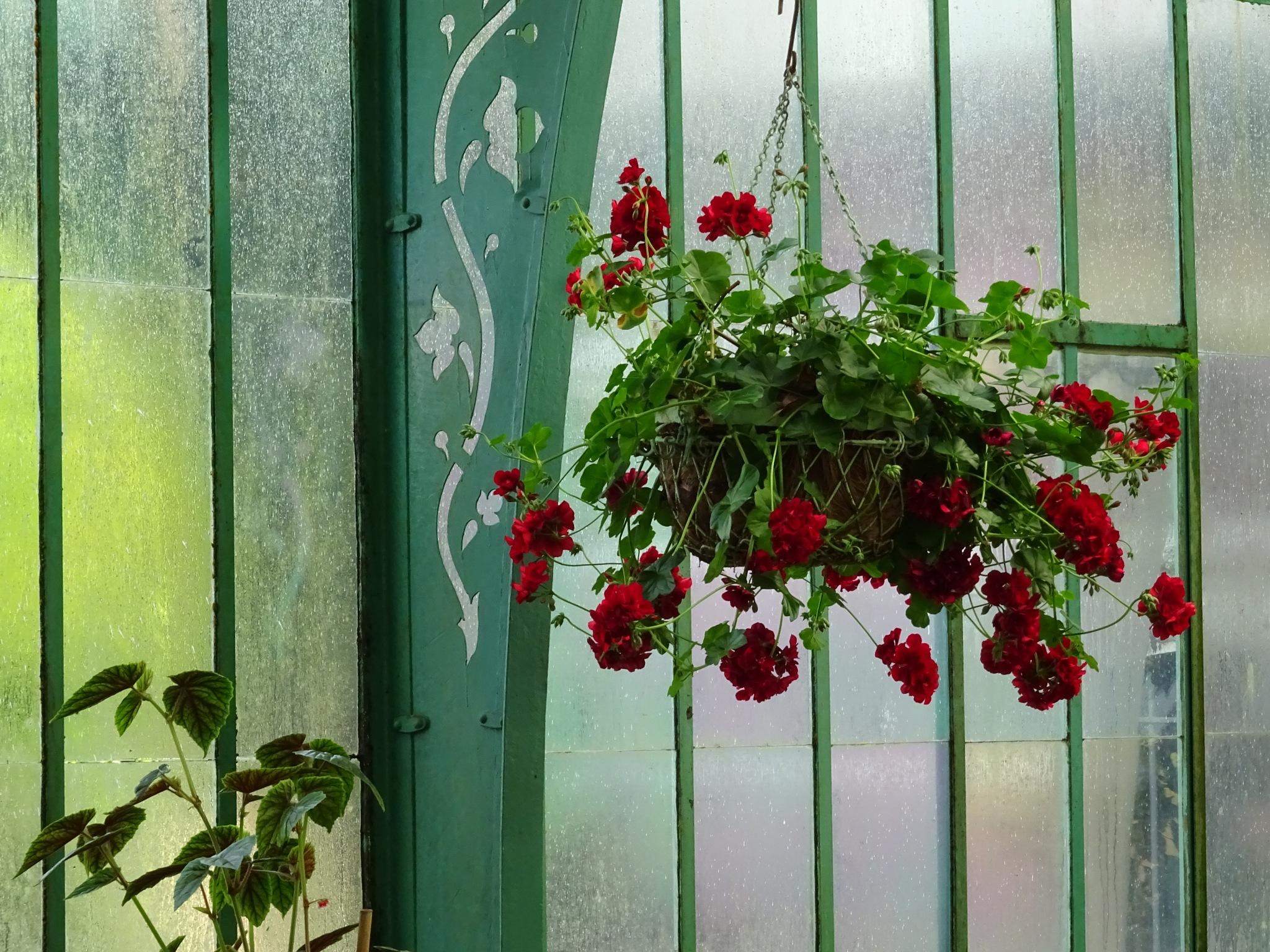 Royal Greenhouses by Kelisa