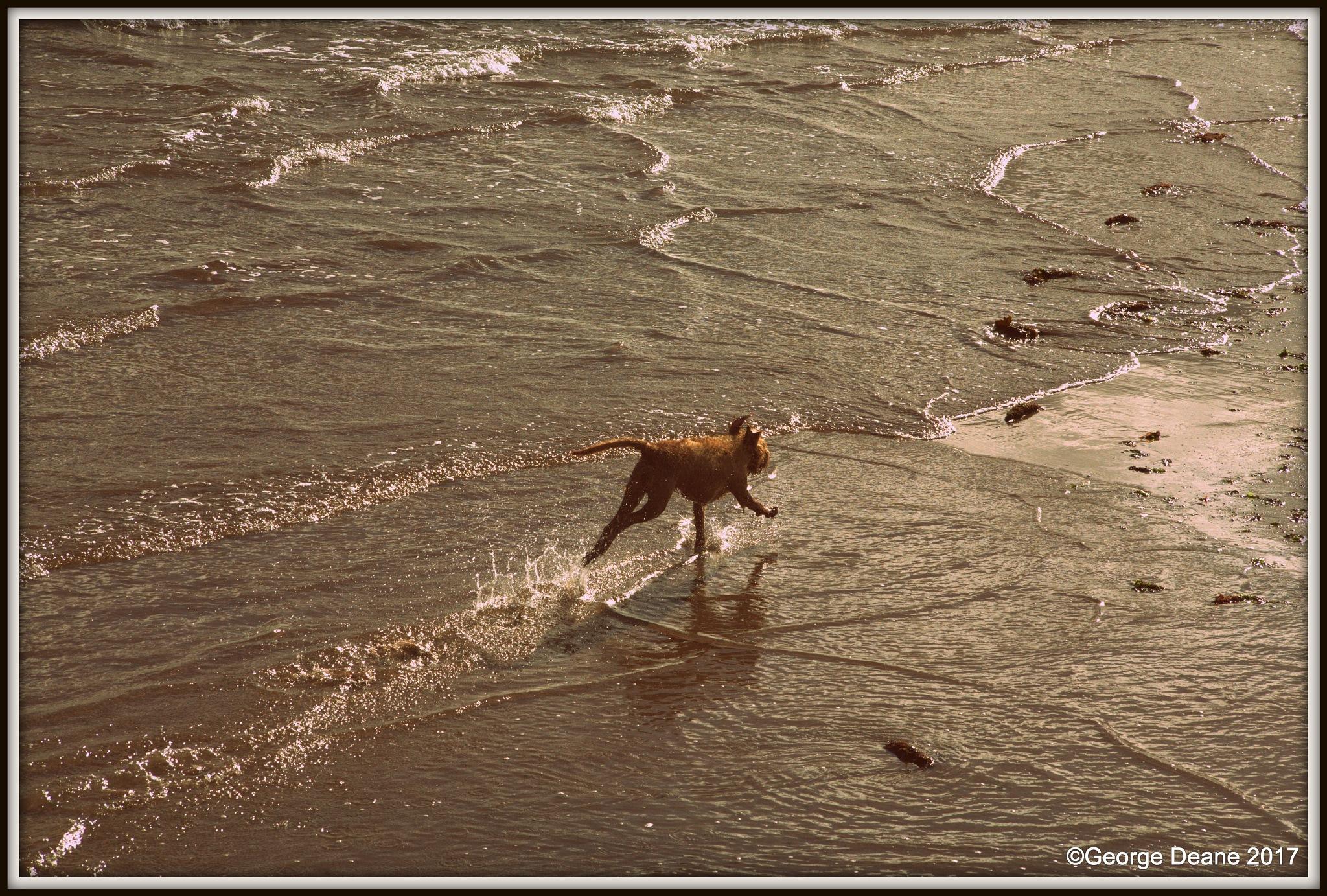 """Dog Splash by George """"Ren"""" Deane"""