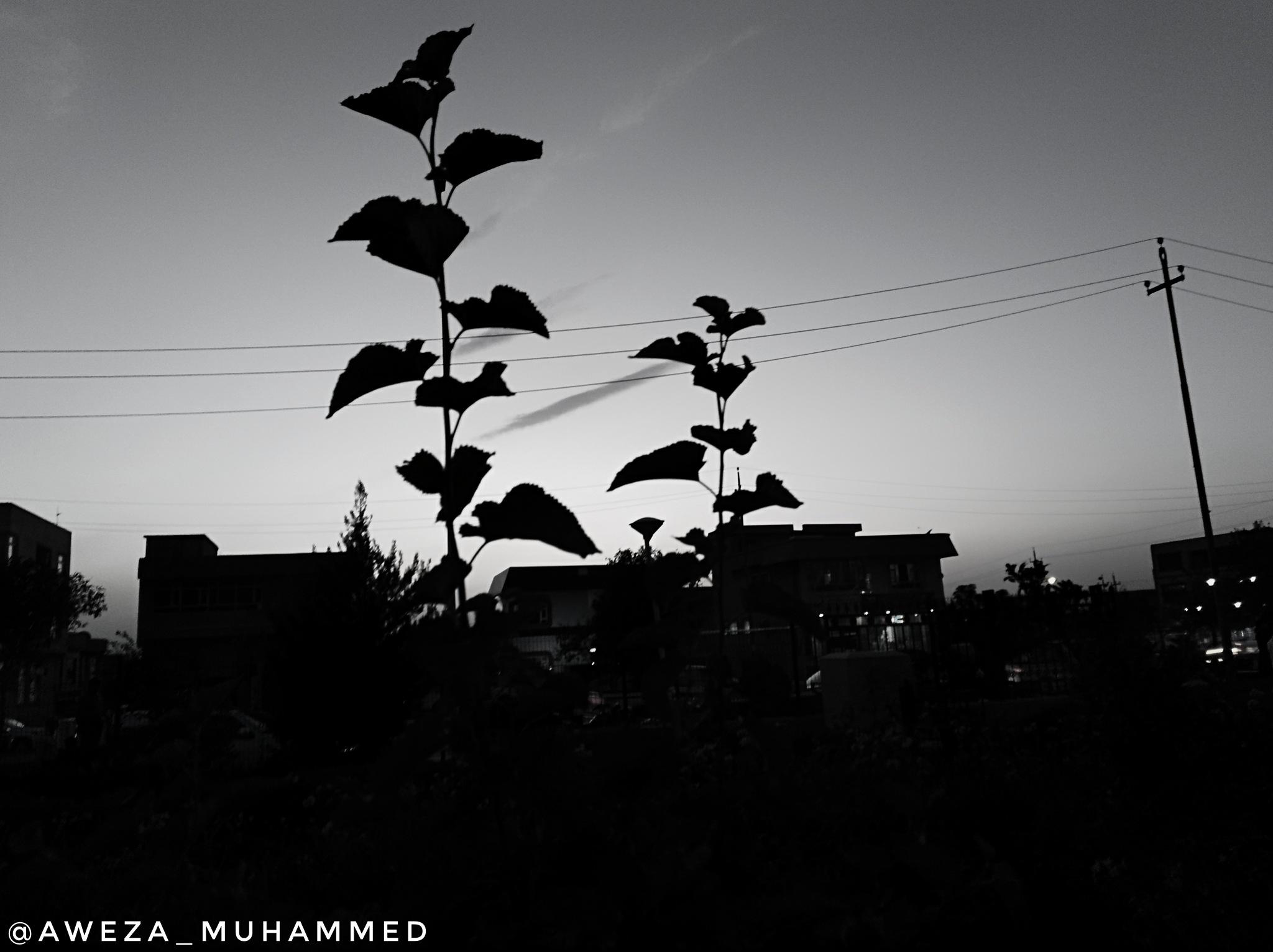 Untitled by Aweza Muhammed