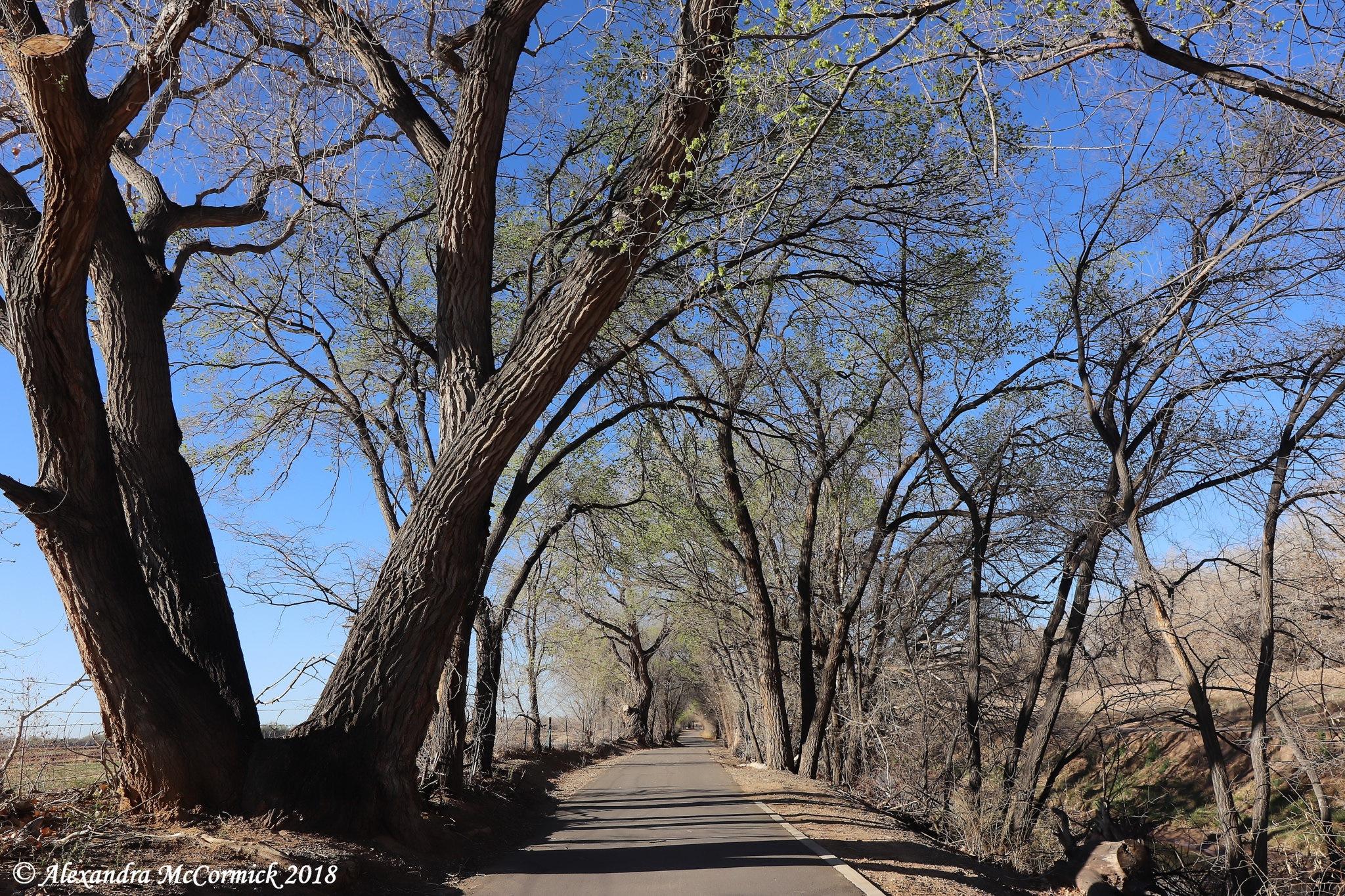 Sunday Stroll by Alexandra L. McCormick