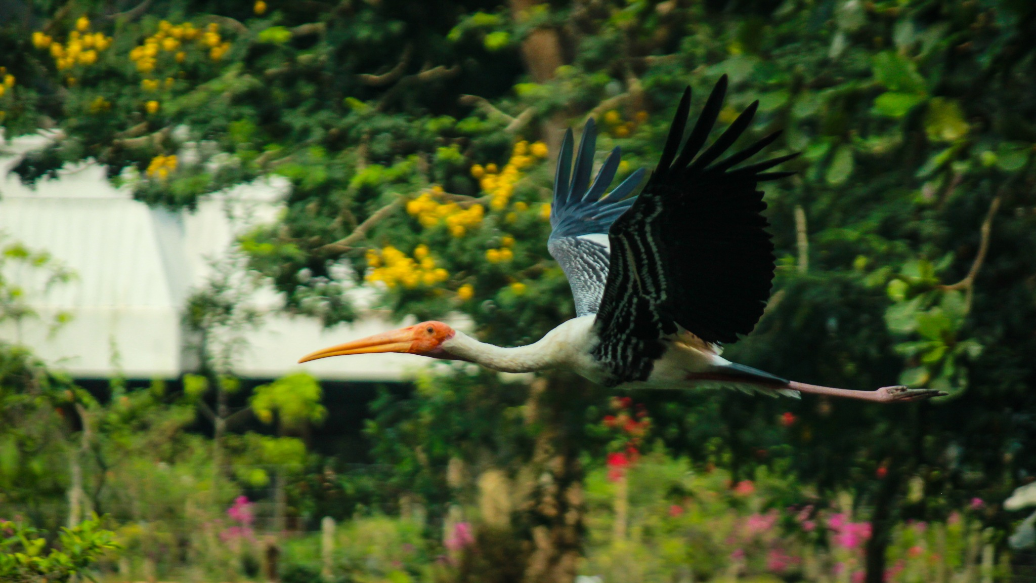 Bird Flying by Avishek karmakar