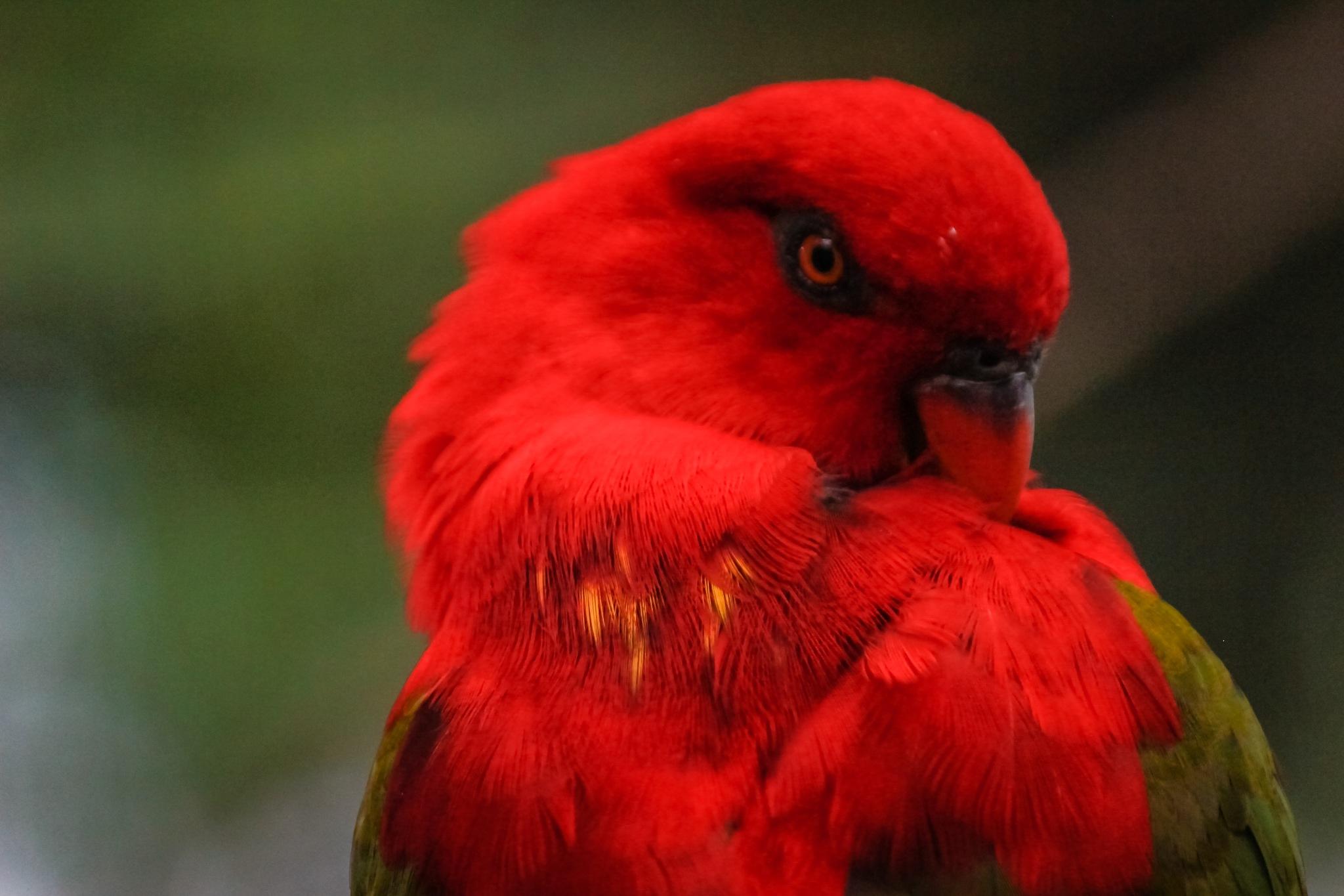 Colorful Bird Portrait  by Avishek karmakar
