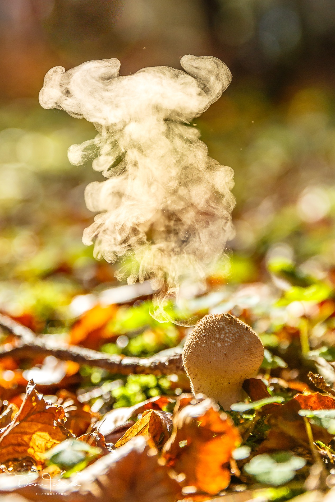 puffball by Dani Taiani