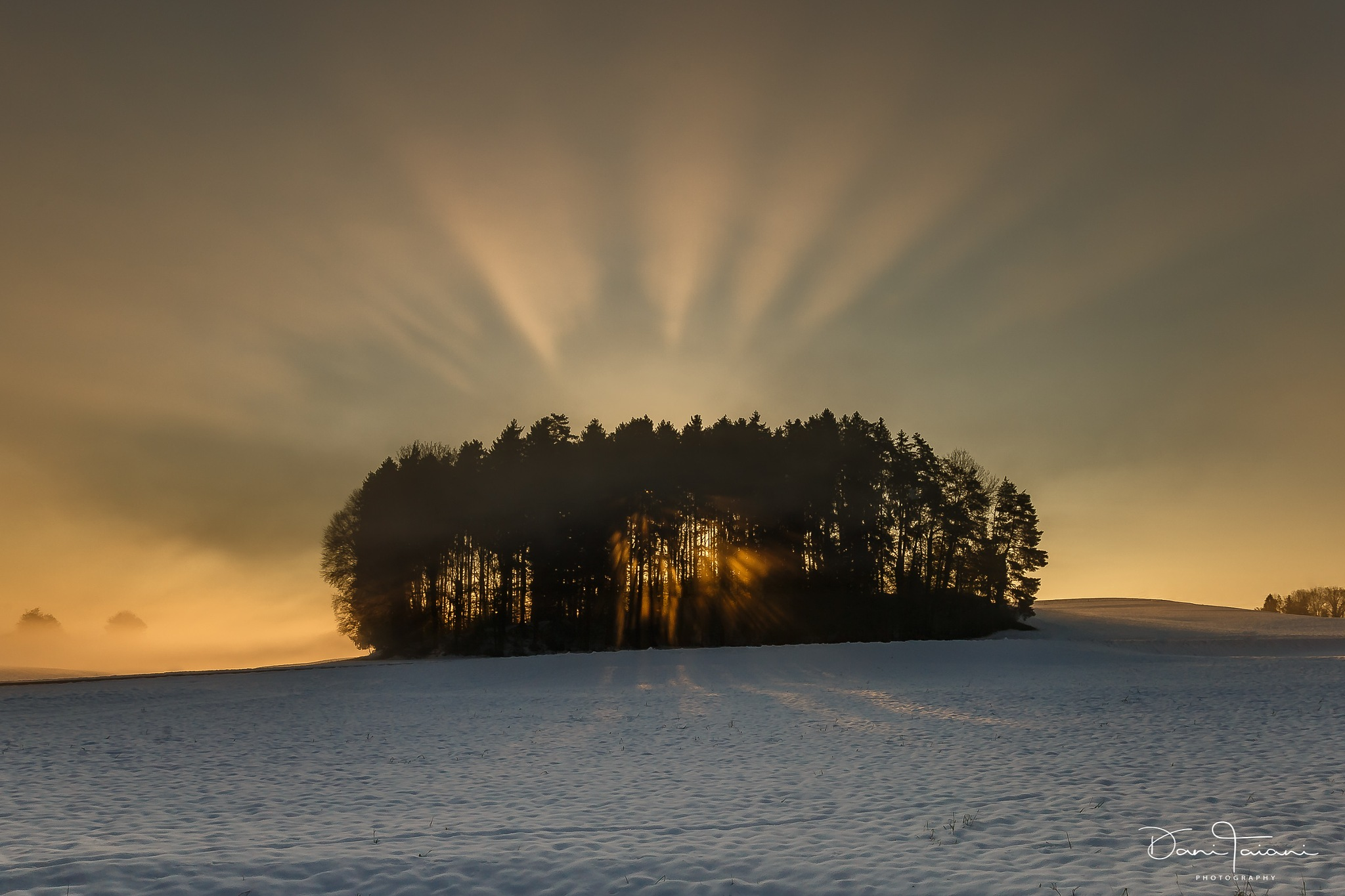 magic forest by Dani Taiani